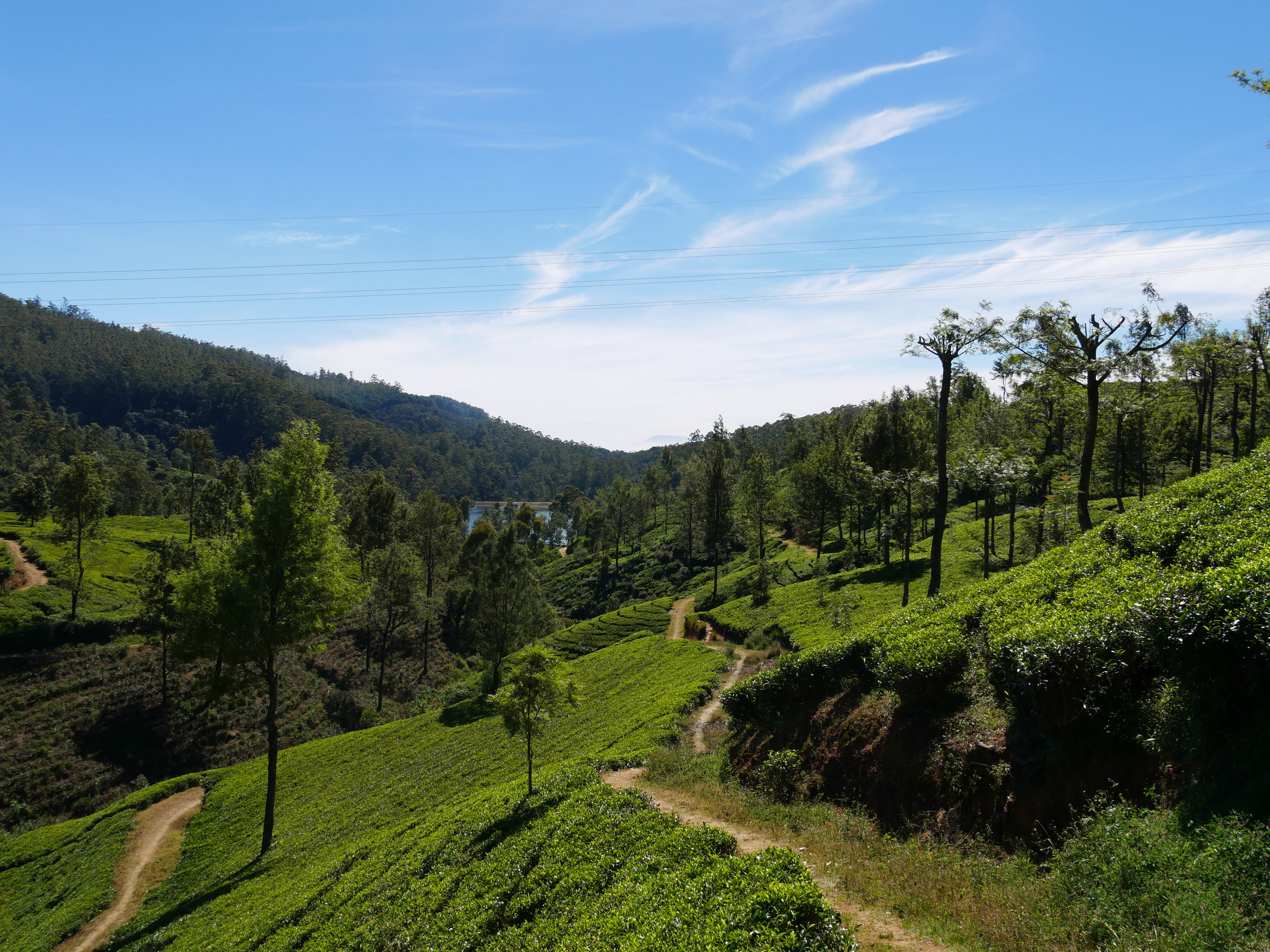 The view from Pedro's Tea Estate