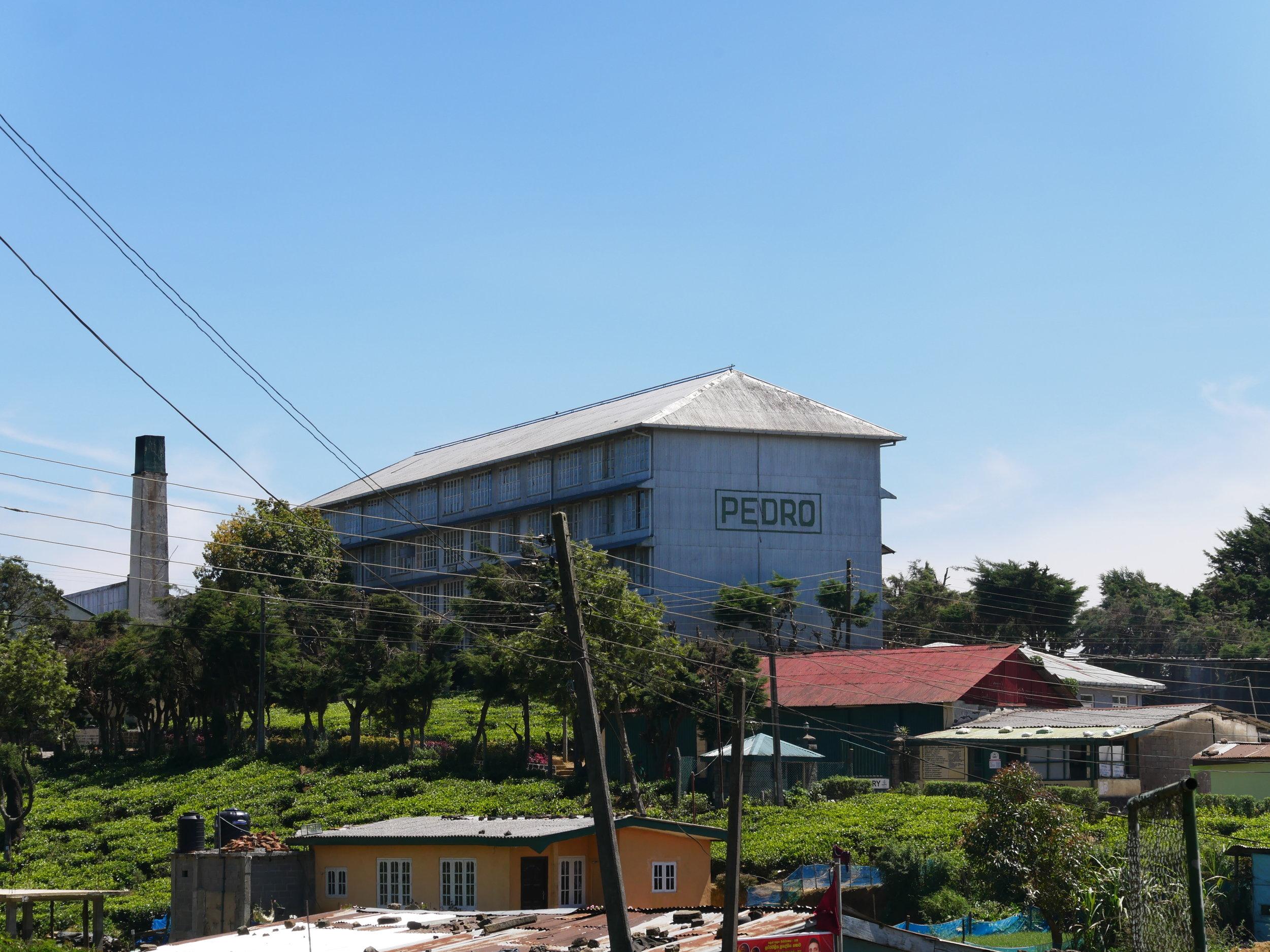 Pedro Tea Plantation, Nuwara Eliya, Sri Lanka