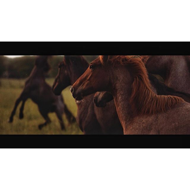 """Shooting these horses for """"Wheels of Laredo"""" was of the highlights of my year. Such gorgeous creatures and just amazing to watch, no less capture for our shoot. I had a terrific experience in Nashville thanks to these amazing creatures. Still from """"Wheels of Laredo."""" Really cool shooting the first music video for Tanya Tucker's first album in 17 years. Awesome workin within director @masklab again and the crew in Nashville are not only top notch but the nicest people around.  Produced by @lorenhughes and @thomfennessey. Captured on RED Monstro through Master Anamorphic lenses. Aerial stuff was with a #dji #mavicpro2 continuing to impress the hell out of me when I cut it in with Arri and RED. Some #sonya7sii sprinkled in."""