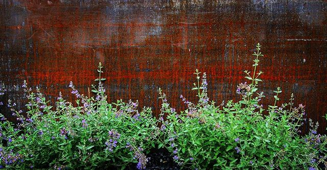 """Deep Thought of the Day: """"Landscaping is about finding harmony in disparate elements."""" ...Discuss amongst yourselves  #jadelandscaping #yeglandscaping #yeglandscaper #landscapedesign #landscapearchitecture #steel #corten #yegdesign #yegphotography #yegcustom #yeg #landscapesensei"""
