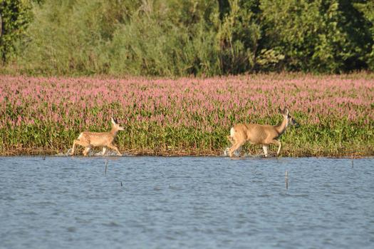 Deer Flat National Wildlife Refuge