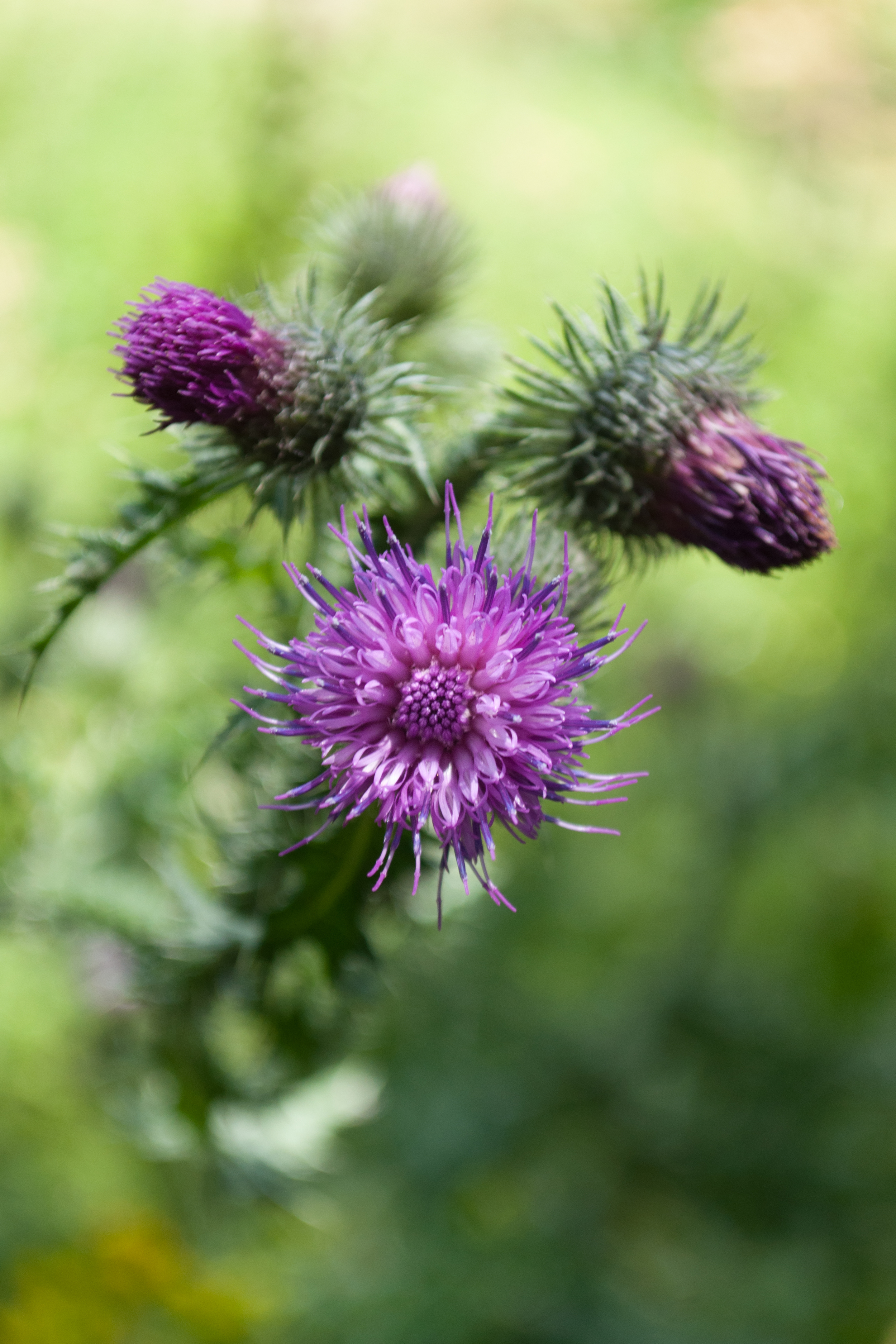 roza szkocji - 140706 - DSC_1420-3.jpg