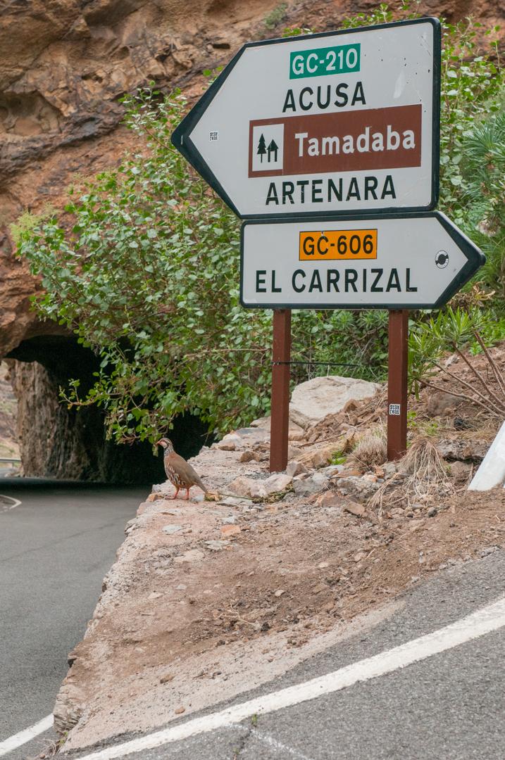 Gran Canaria-0404.jpg