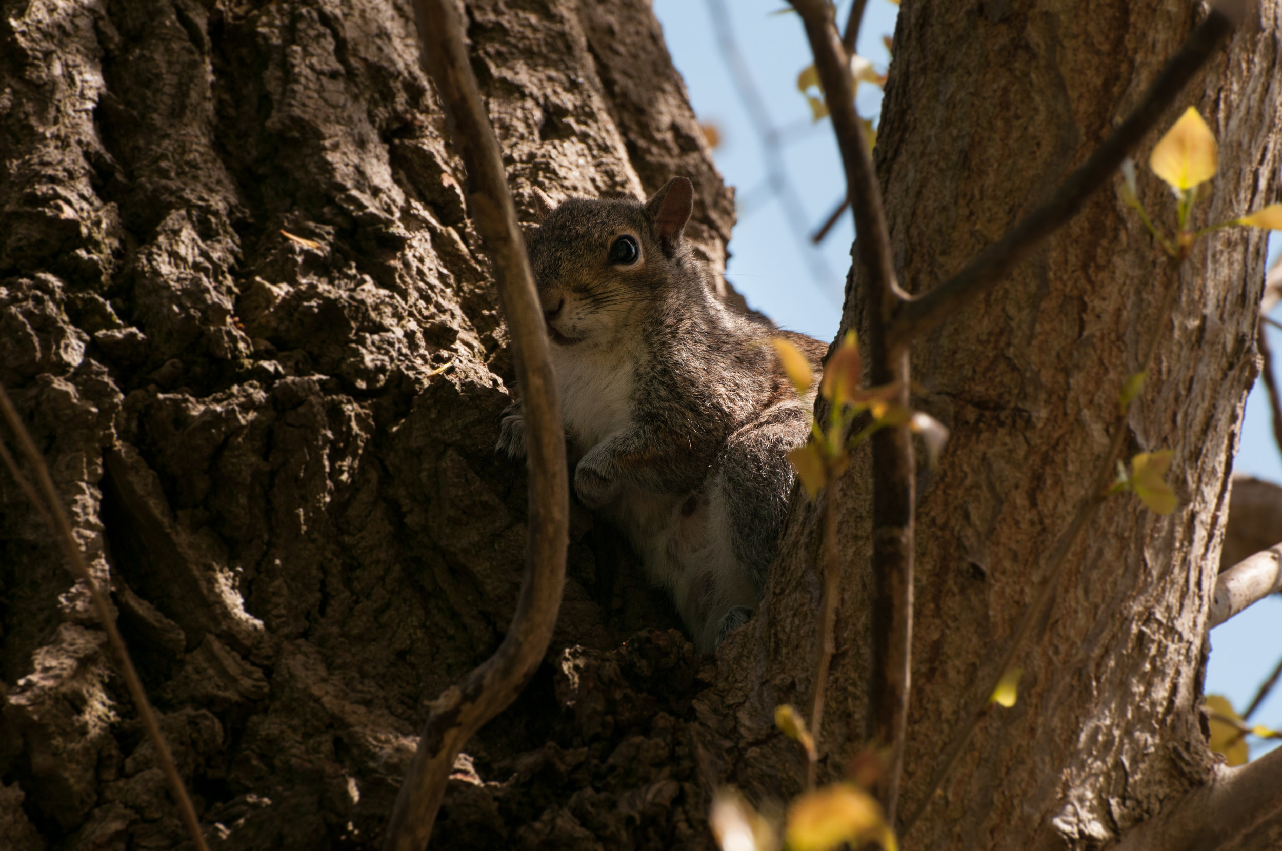Squirrel - 2018 - MAR_8306.jpg