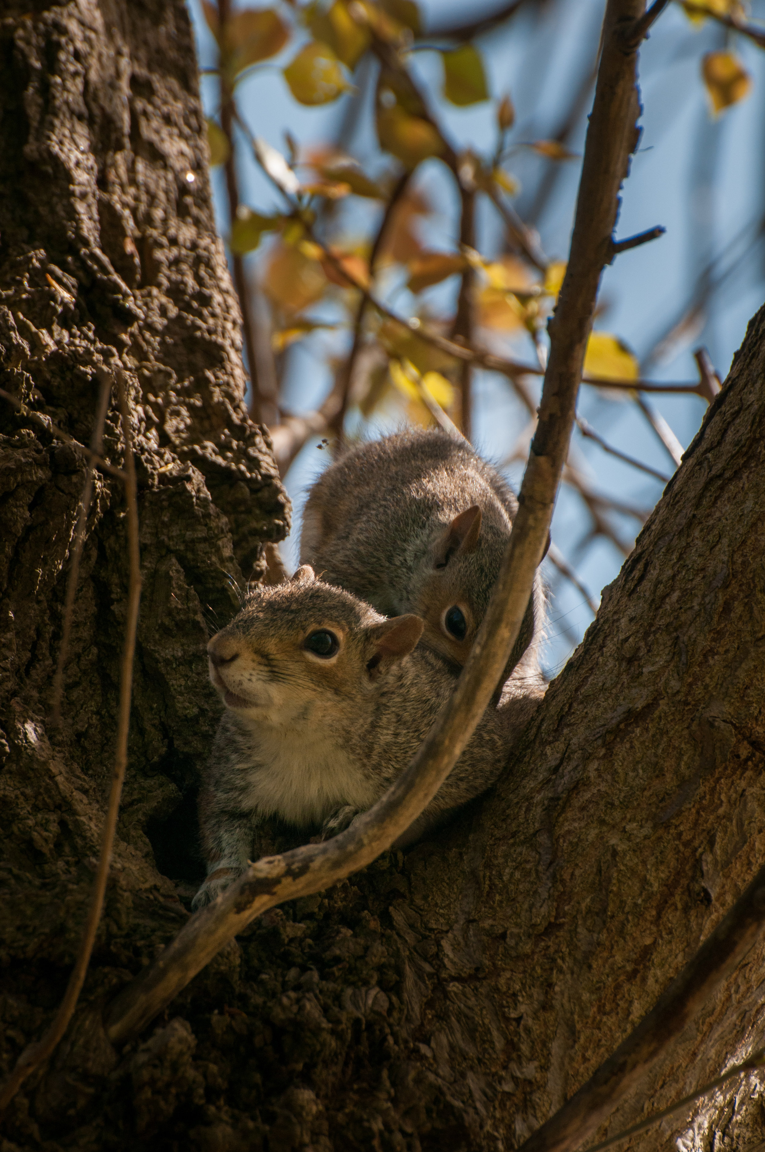 Squirrel - 2018 - MAR_8336.jpg