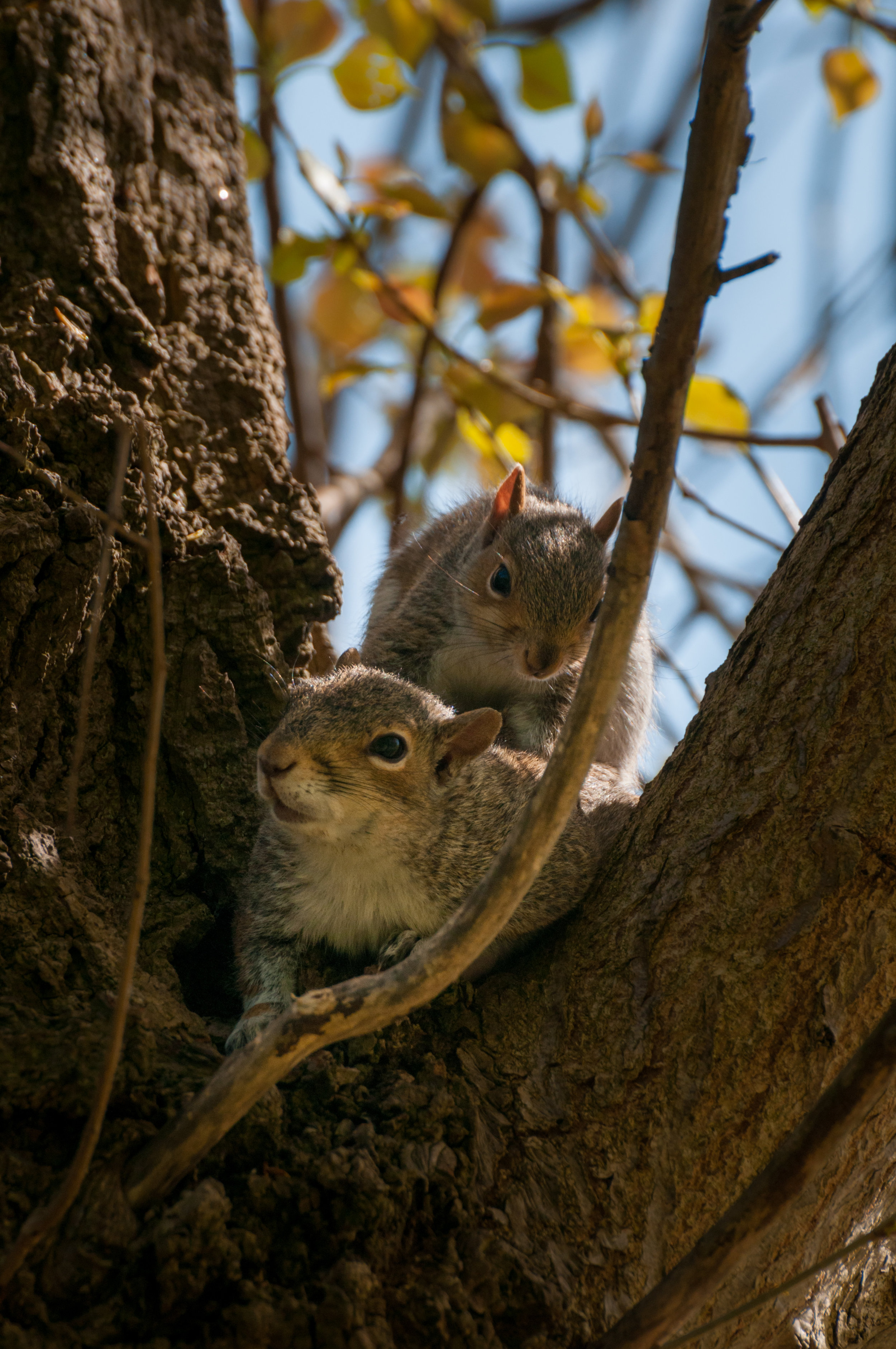 Squirrel - 2018 - MAR_8337.jpg