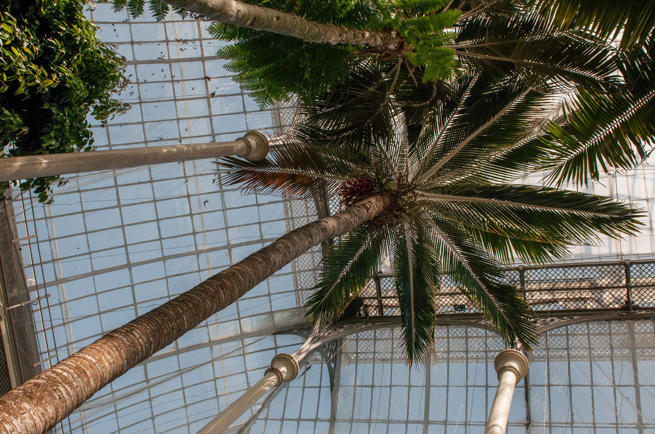 Edi Botanic Garden - 2018 - MAR_8726.jpg