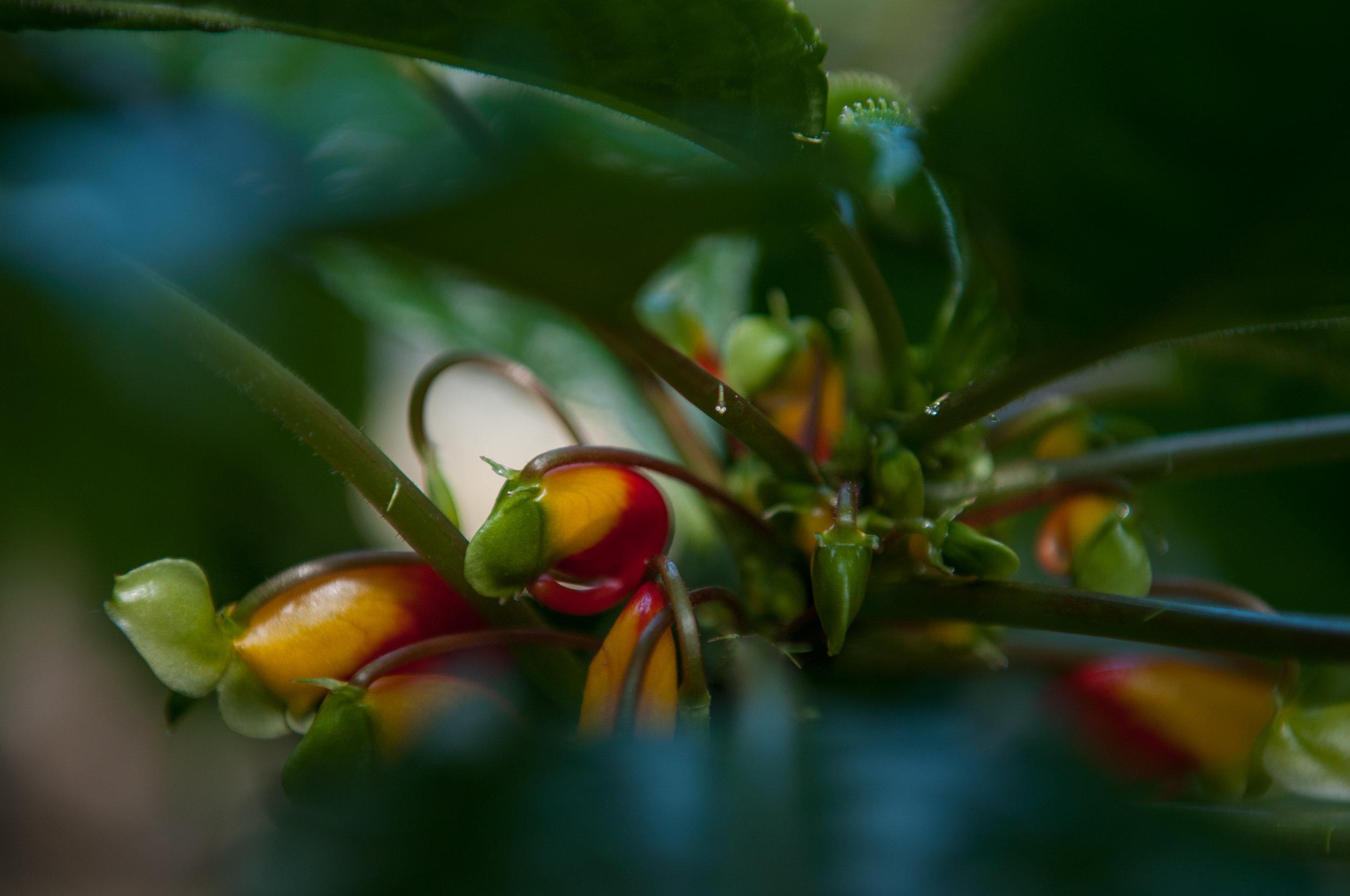 Edi Botanic Garden - 2018 - MAR_8753.jpg