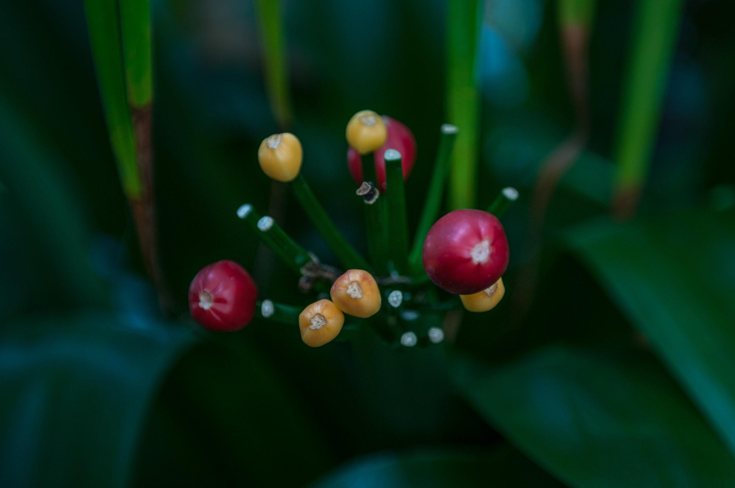 Edi Botanic Garden - 2018 - MAR_8762.jpg