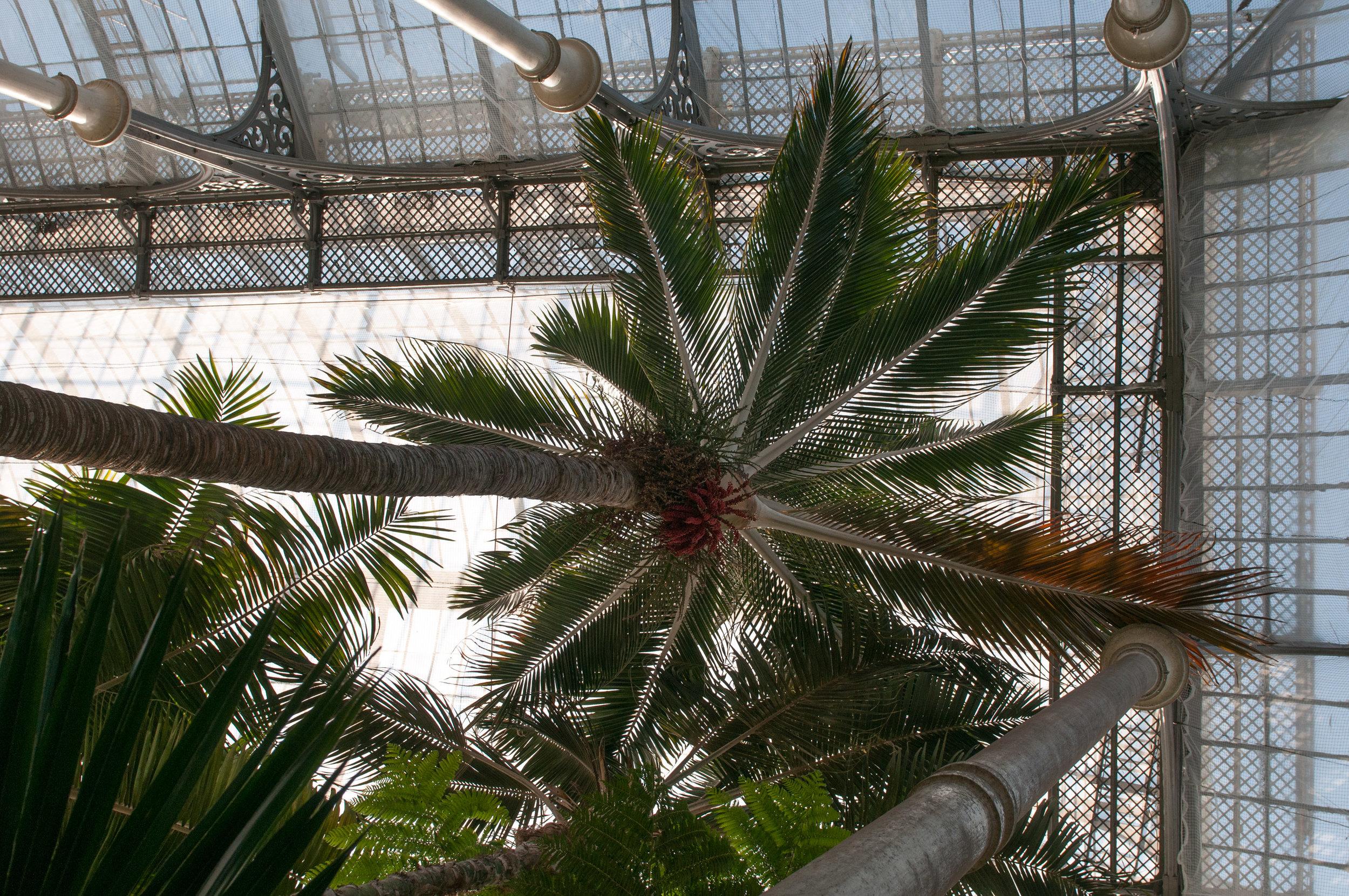 Edi Botanic Garden - 2018 - MAR_8748.jpg