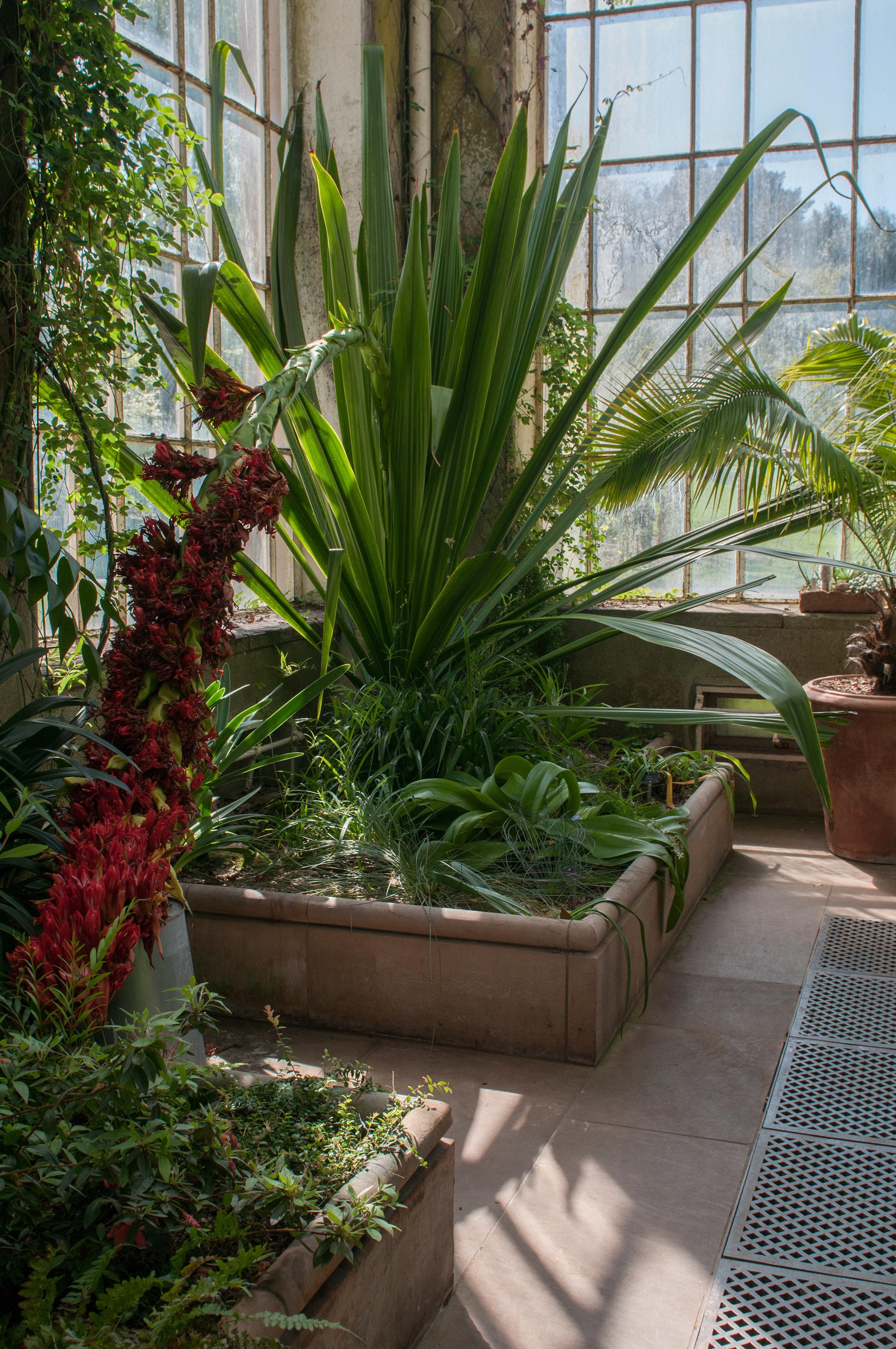 Edi Botanic Garden - 2018 - MAR_8770.jpg