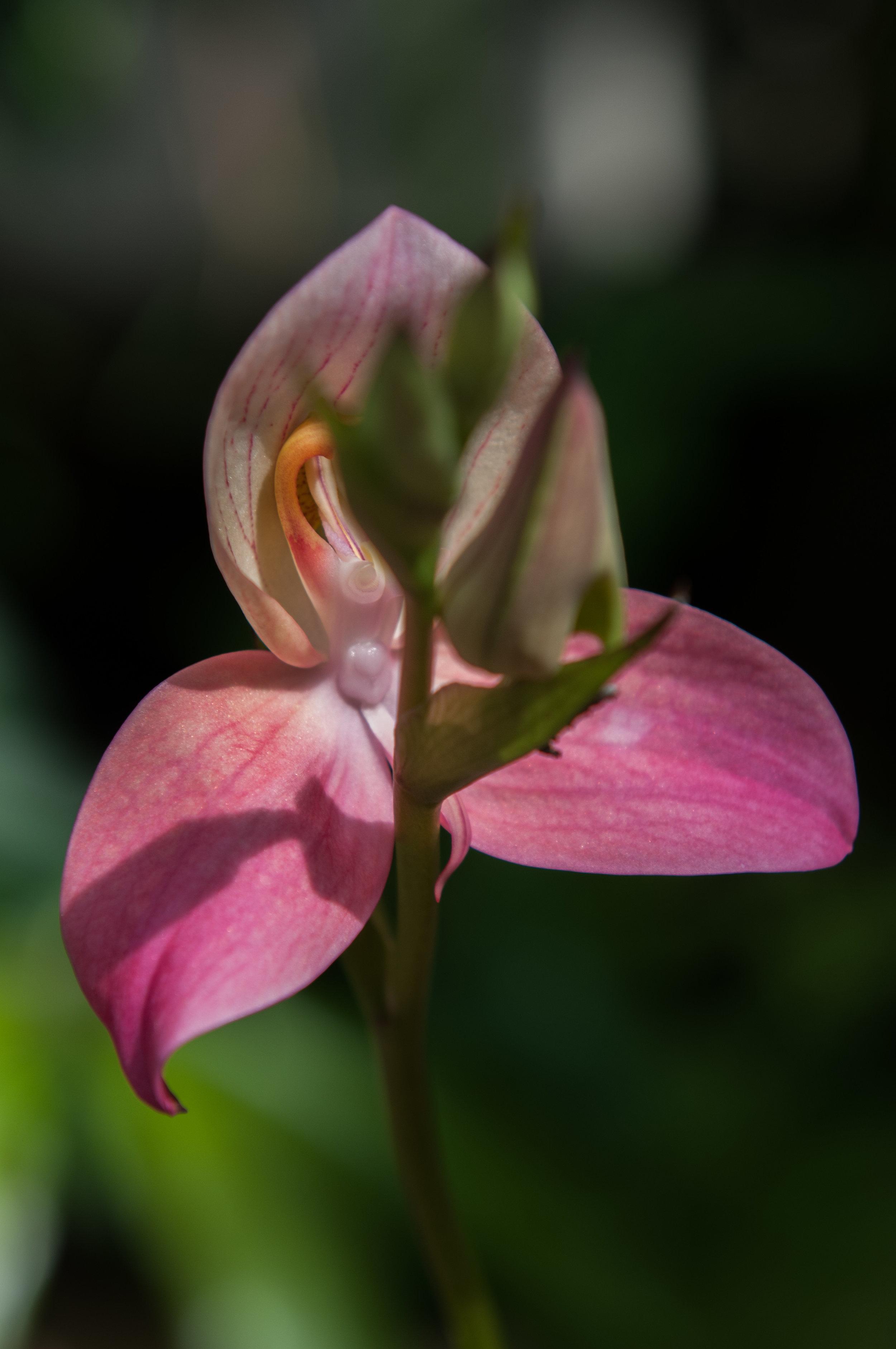 Edi Botanic Garden - 2018 - MAR_8782.jpg