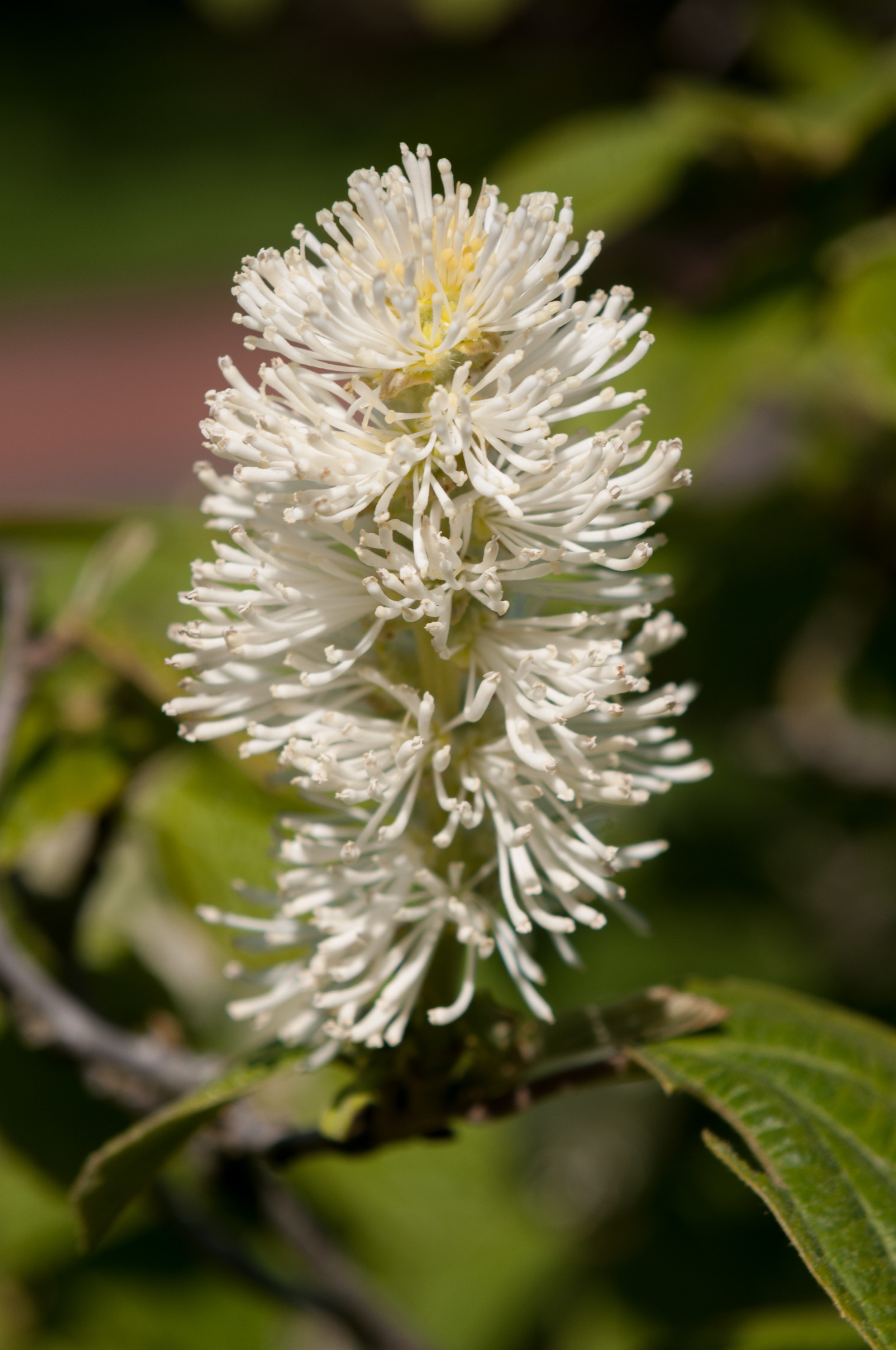 Edi Botanic Garden - 2018 - MAR_8791.jpg
