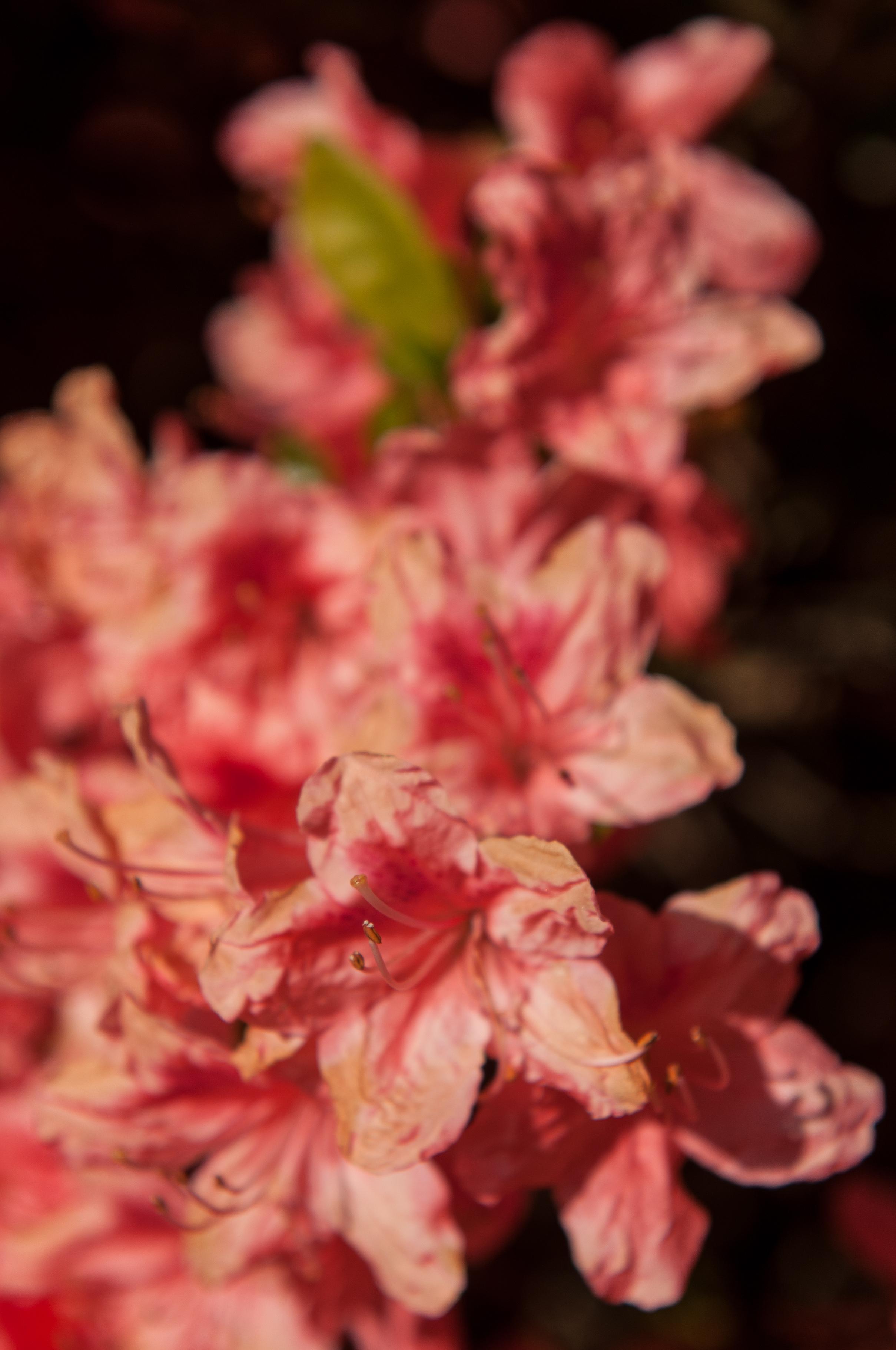 Edi Botanic Garden - 2018 - MAR_8807.jpg