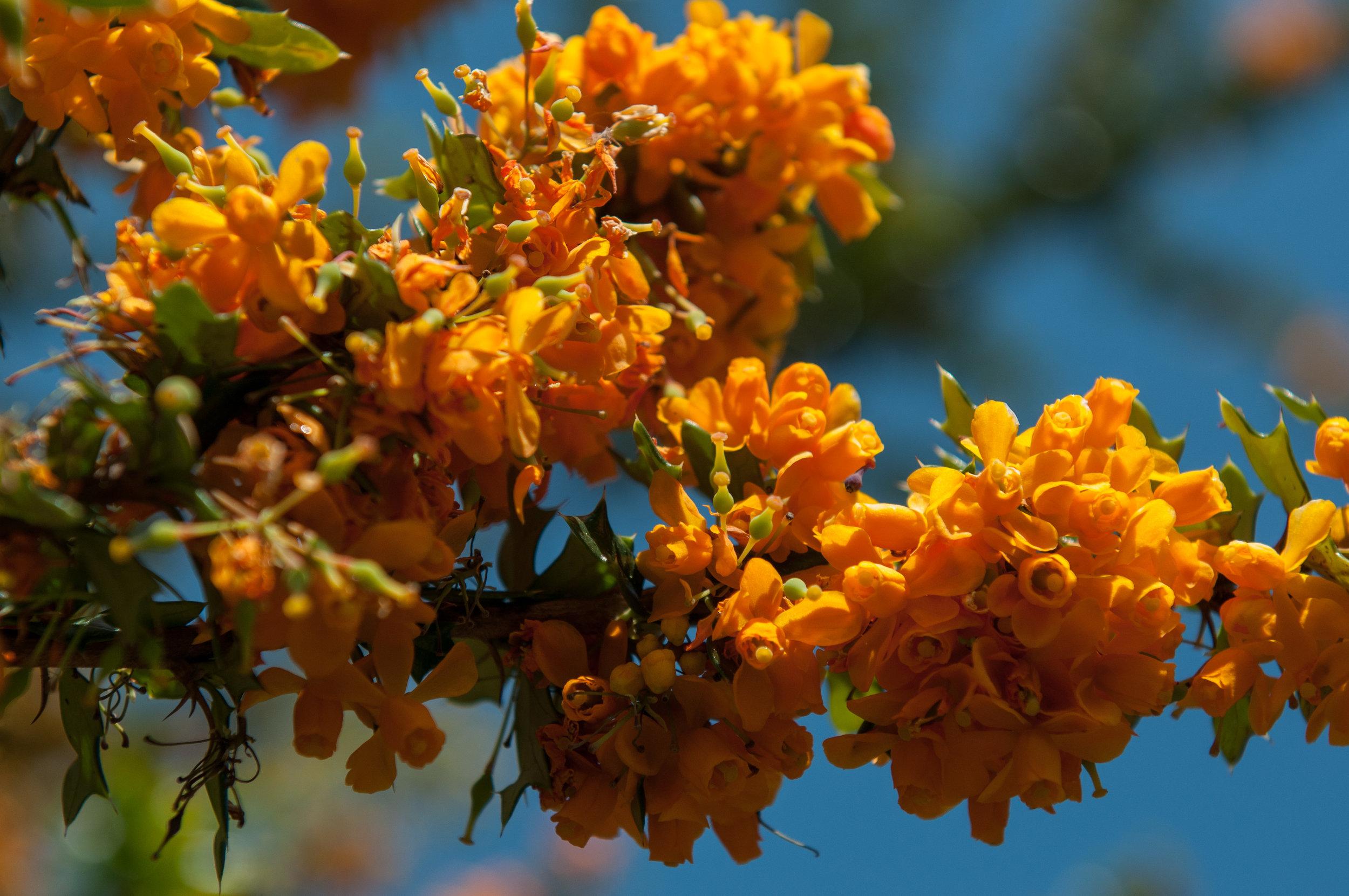 Edi Botanic Garden - 2018 - MAR_8846.jpg