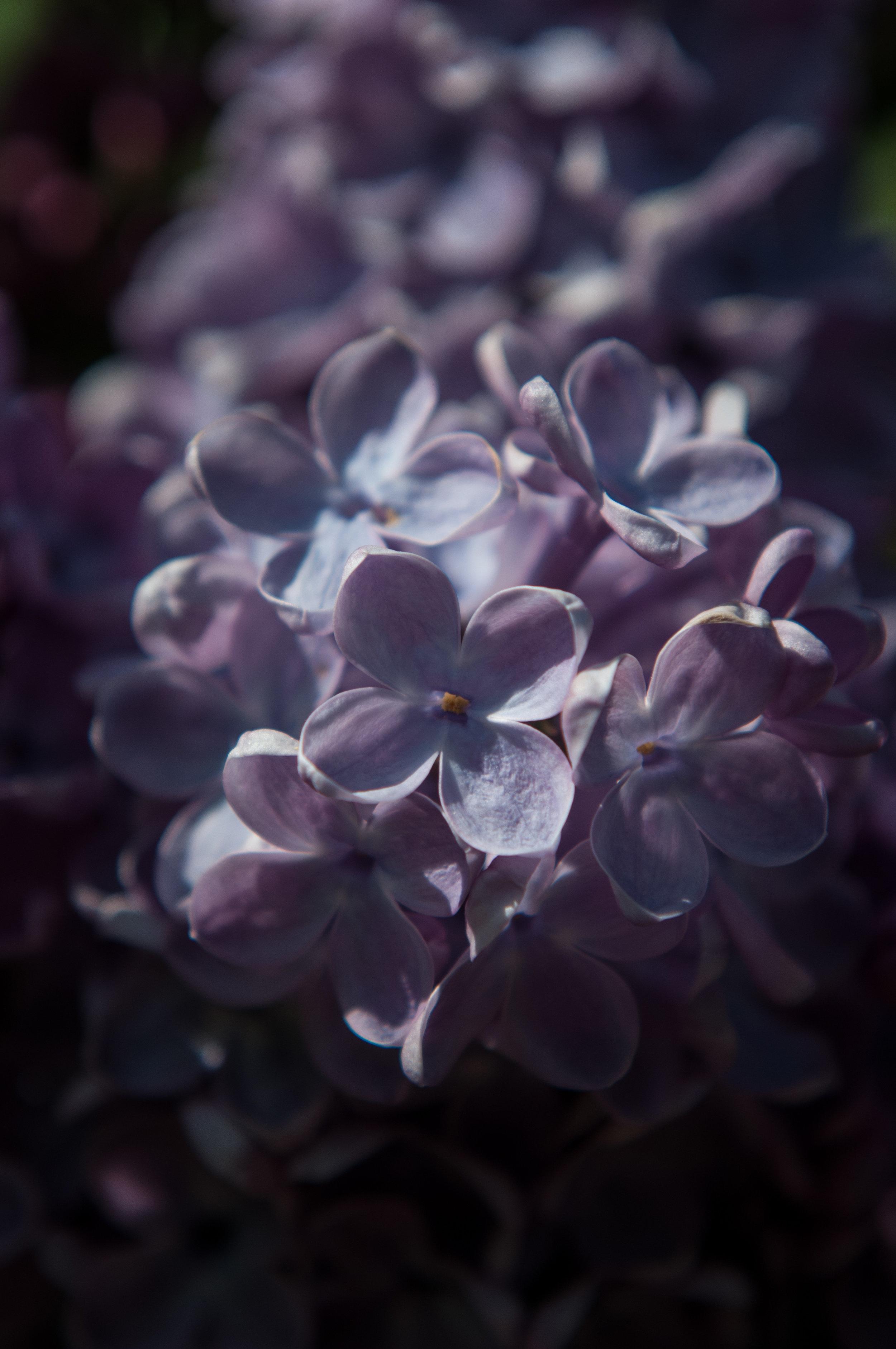 Edi Botanic Garden - 2018 - MAR_8858.jpg