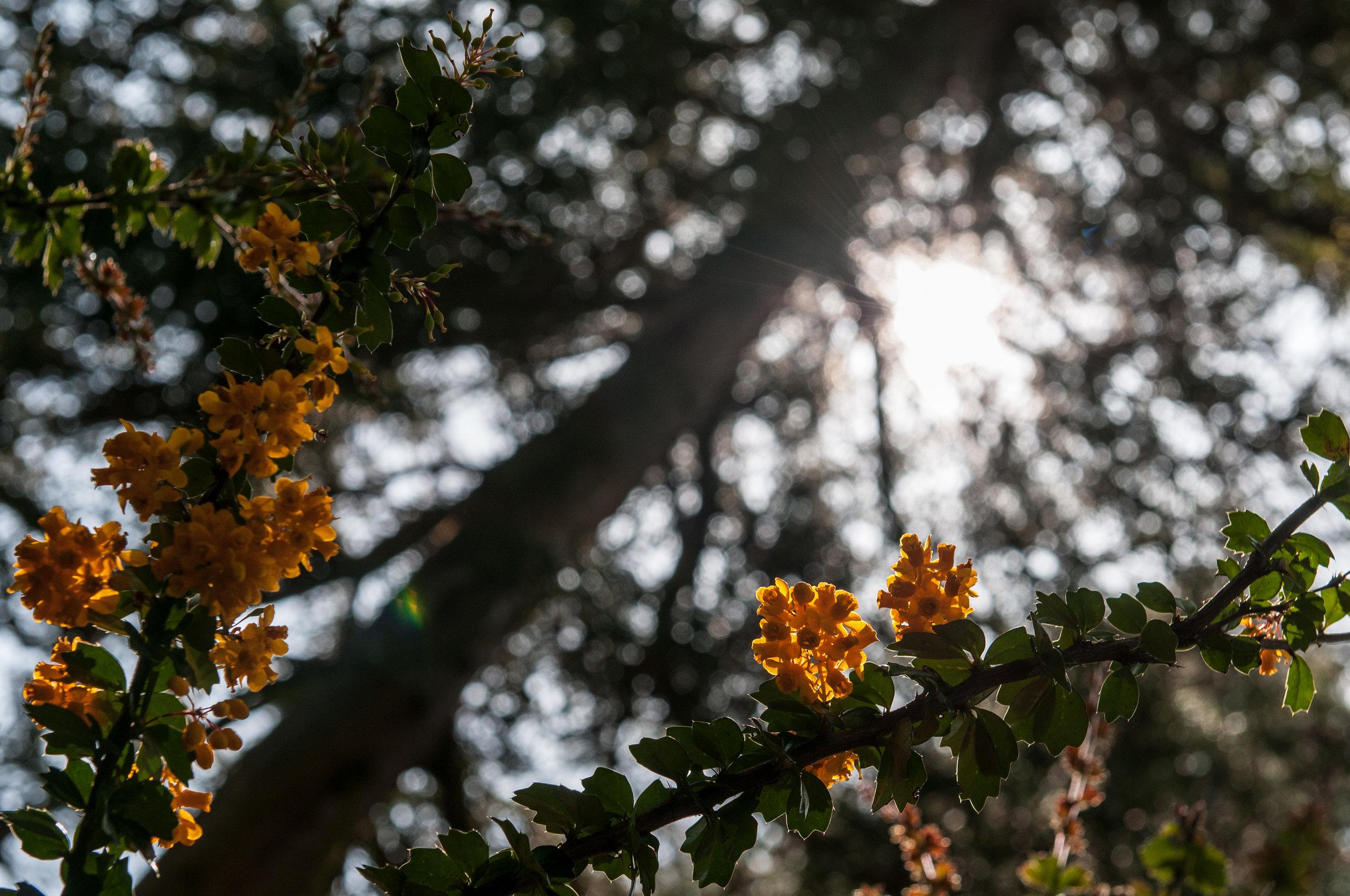 Edi Botanic Garden - 2018 - MAR_8879.jpg