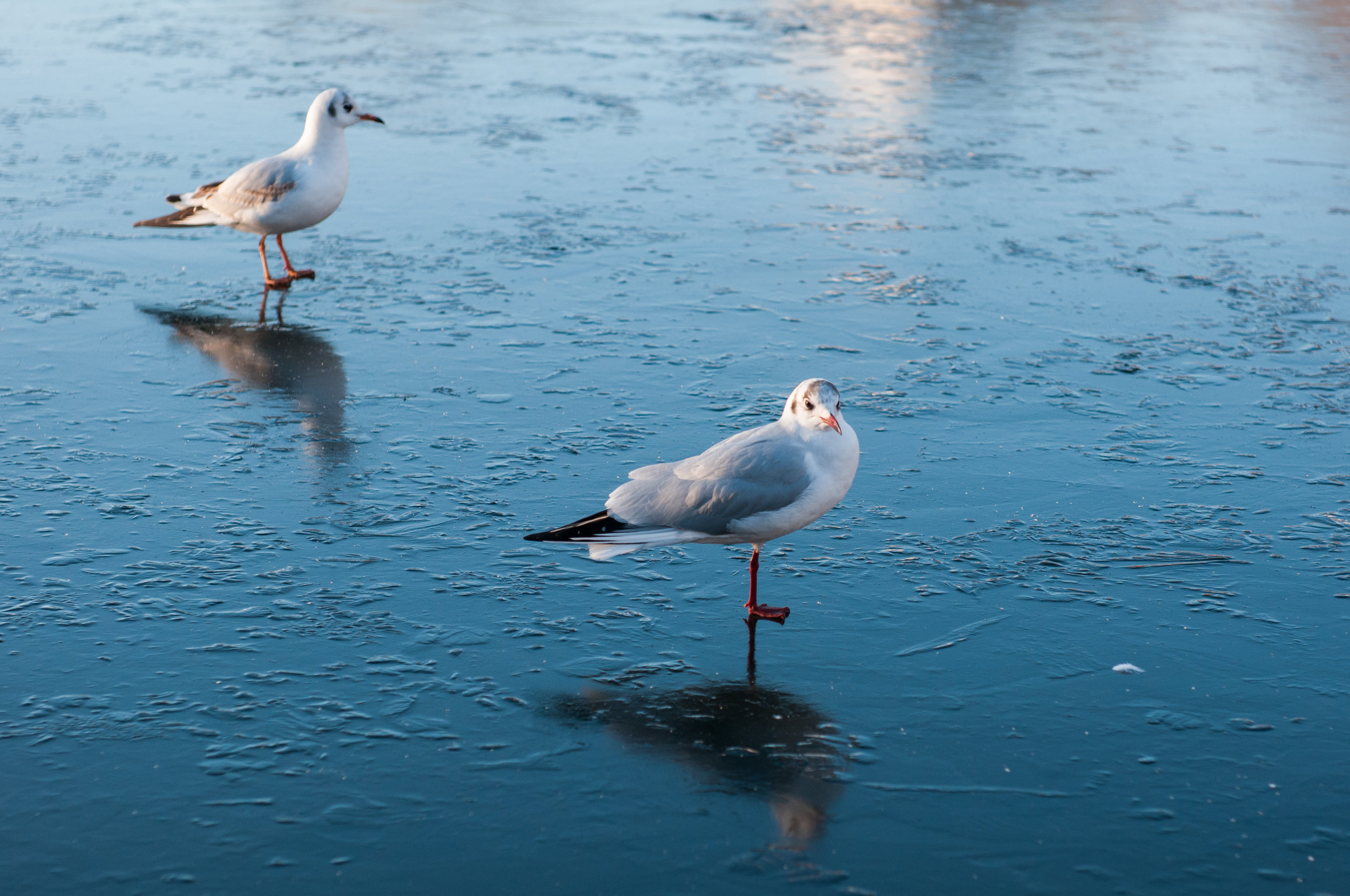 Ptaki lochend park - 2019 - MAR_2548.jpg