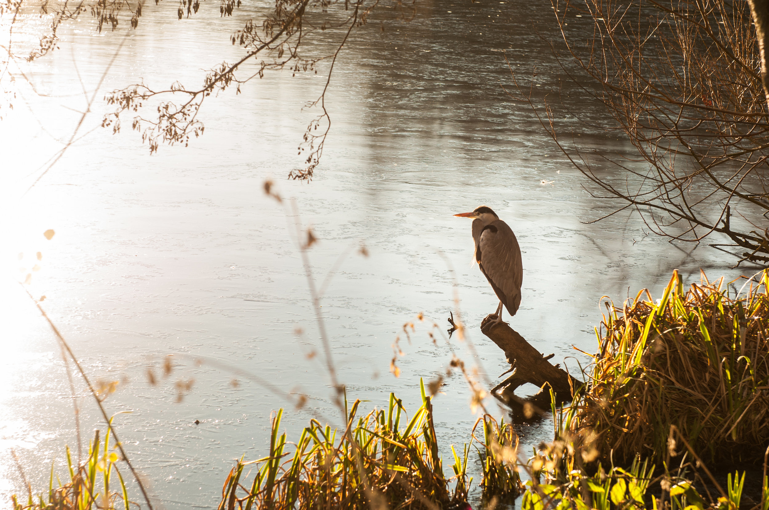 Ptaki lochend park - 2019 - MAR_2573.jpg