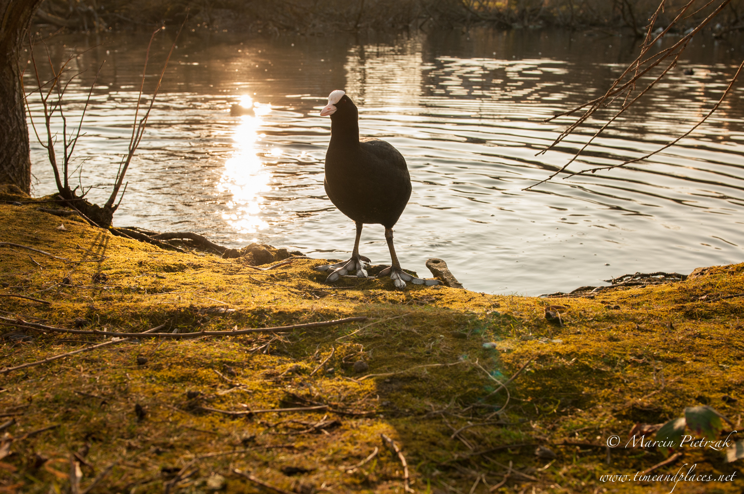 netPtaki Lochend Park - 2019 - MAR_4140.jpg