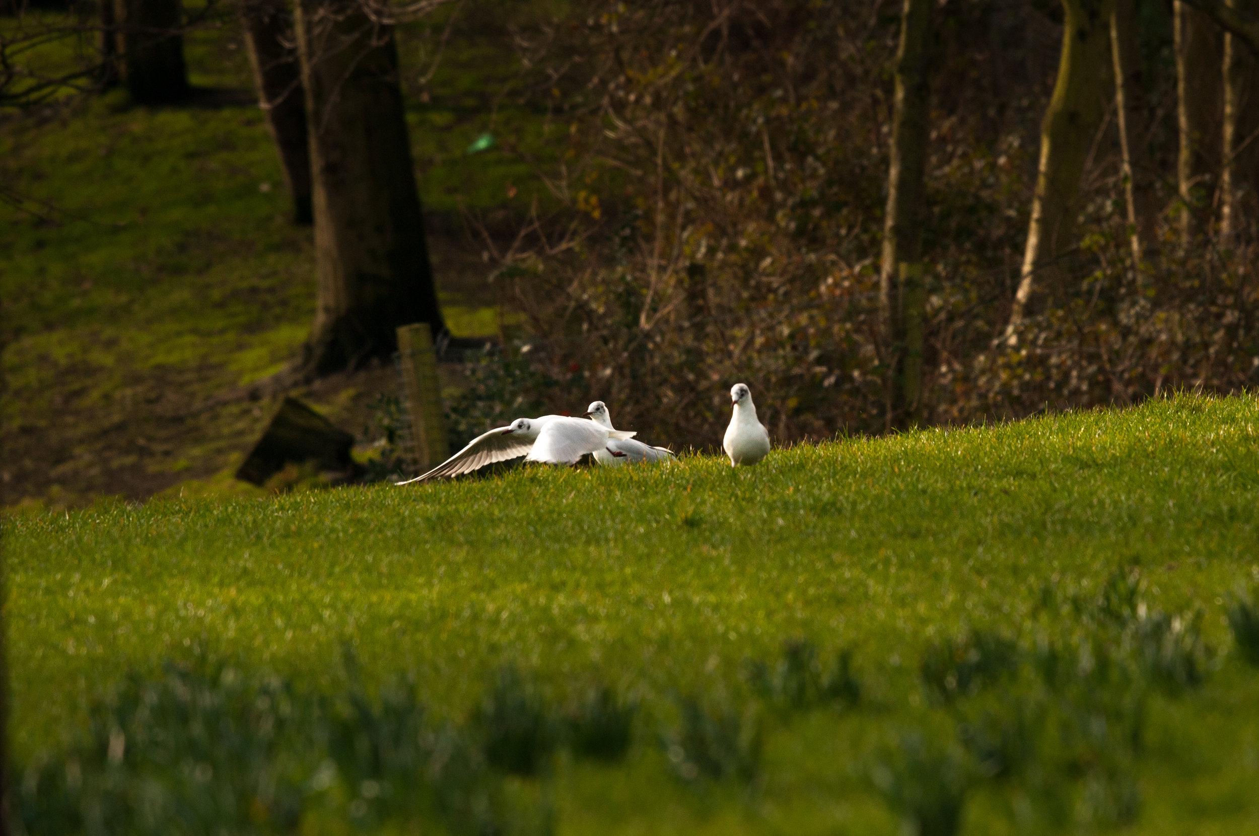 Ptaki Lochend - 2019 - MAR_4509-2.jpg