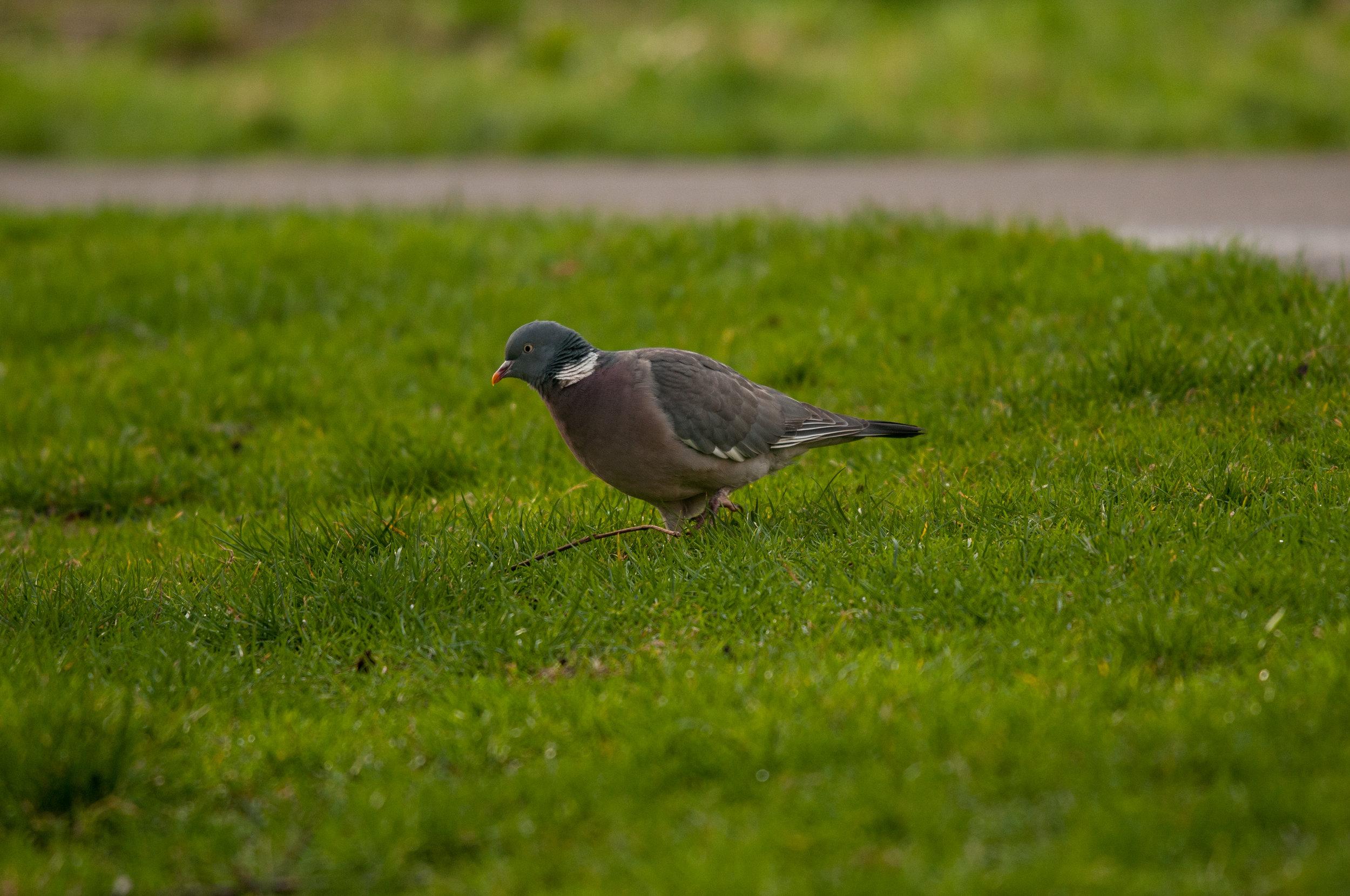 Ptaki Lochend - 2019 - MAR_4521.jpg