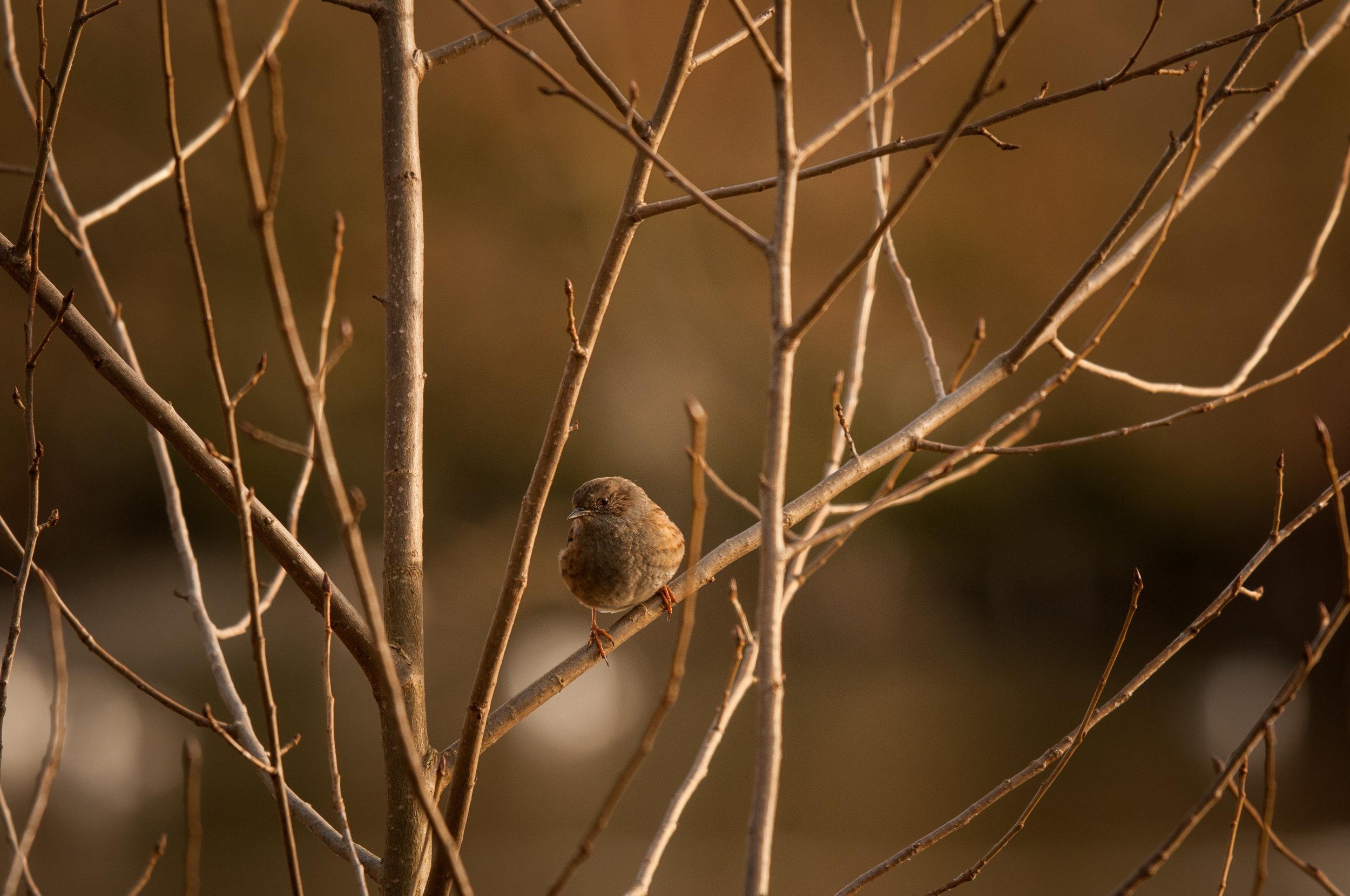 Ptaki Lochend - 2019 - MAR_4529.jpg