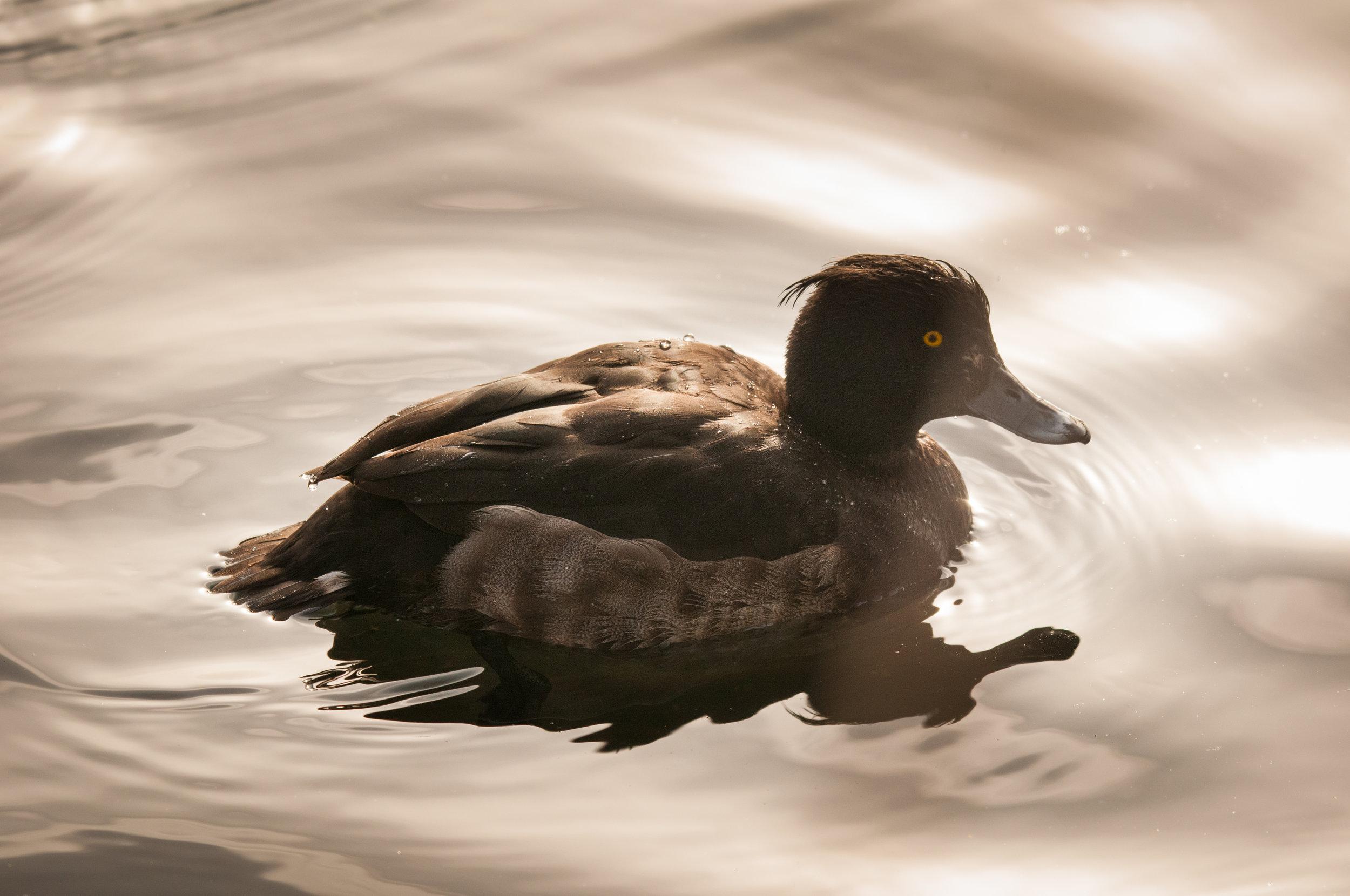 Ptaki Lochend - 2019 - MAR_4582.jpg