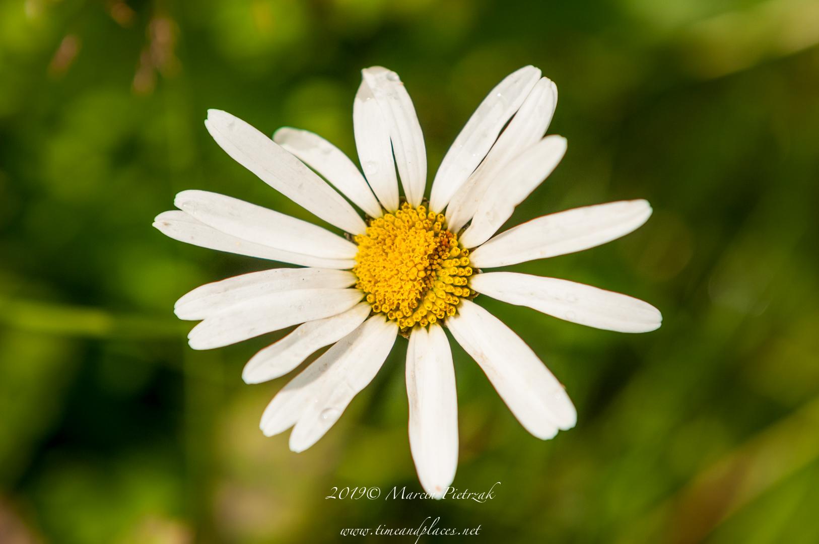 netBotanic Garden flowers - 2019 - MAR_1514.jpg