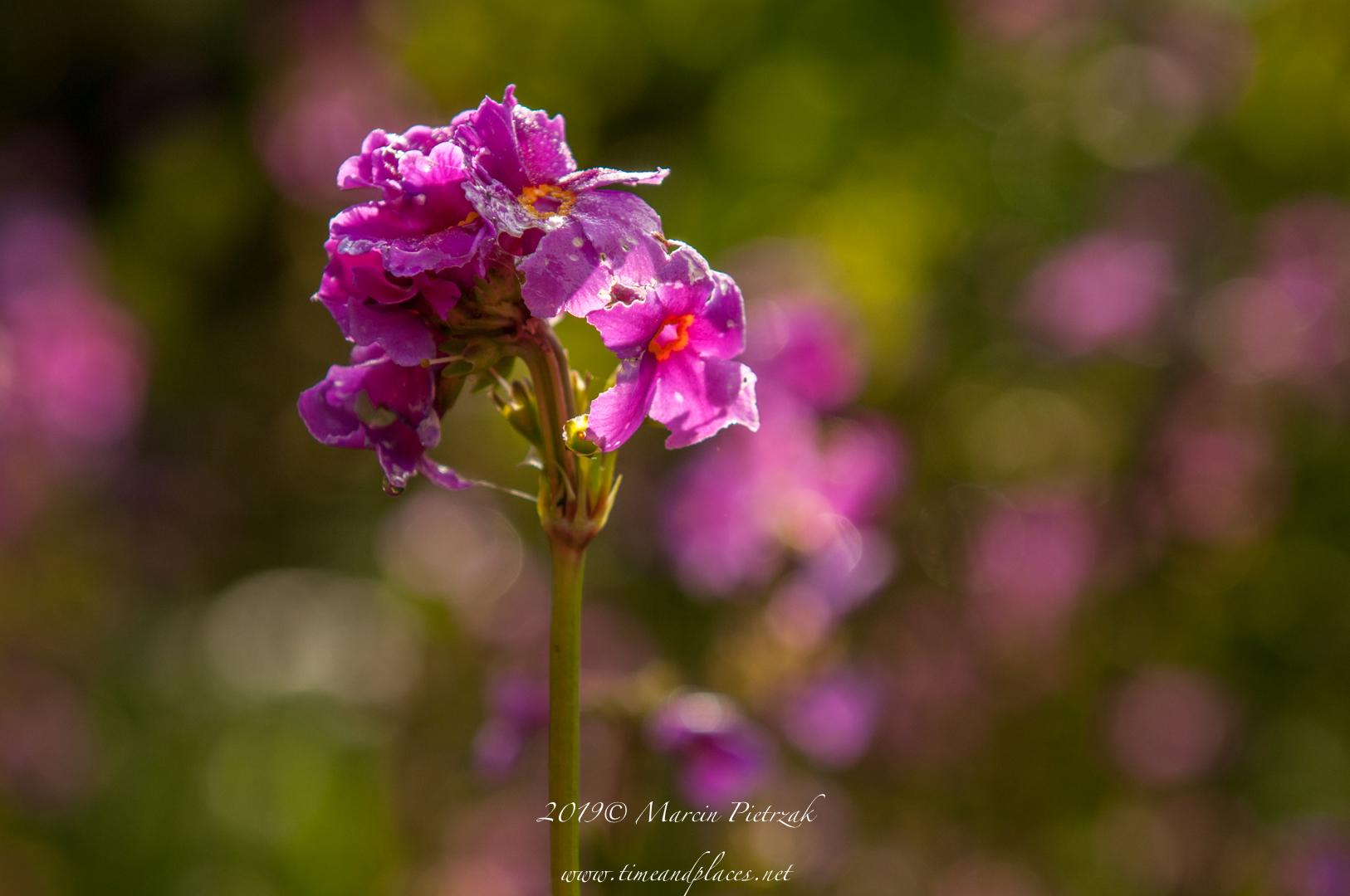 netBotanic Garden flowers - 2019 - MAR_1527.jpg
