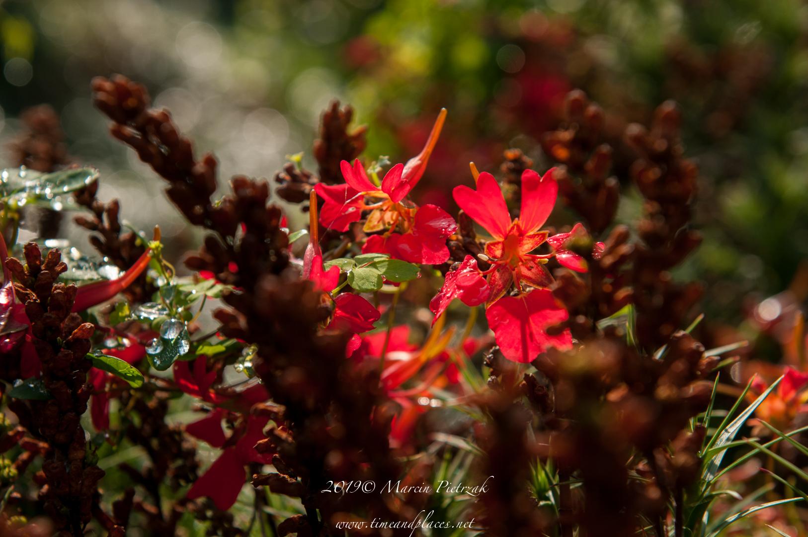netBotanic Garden flowers - 2019 - MAR_1541.jpg