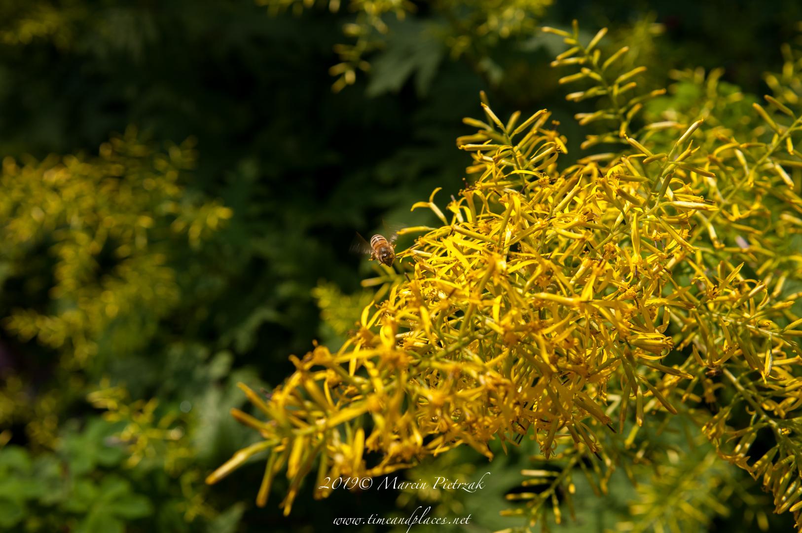 netBotanic Garden flowers - 2019 - MAR_1578.jpg