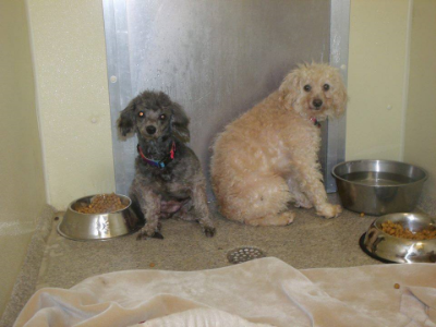 Ginger (Toby's granny) and Toby when they were rescued.