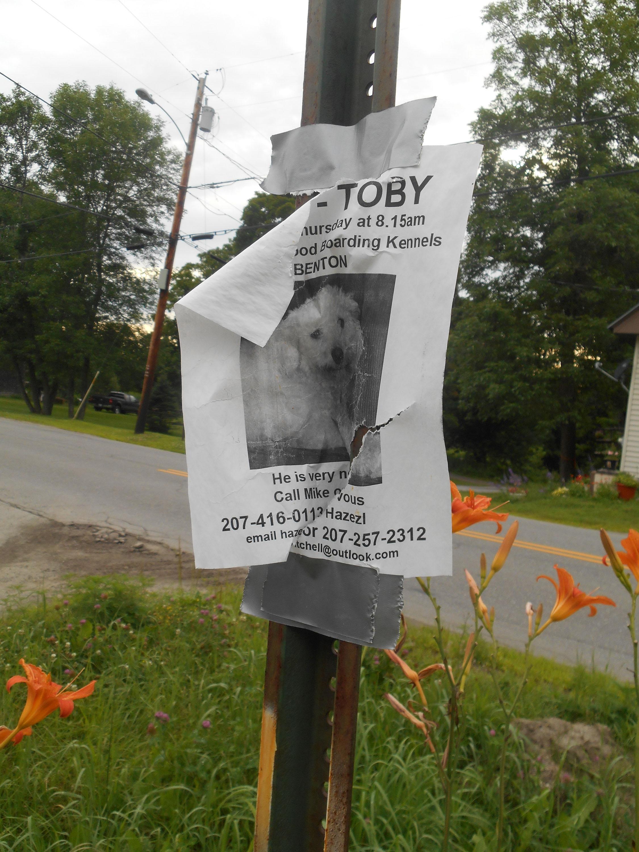 Toby poster.jpg