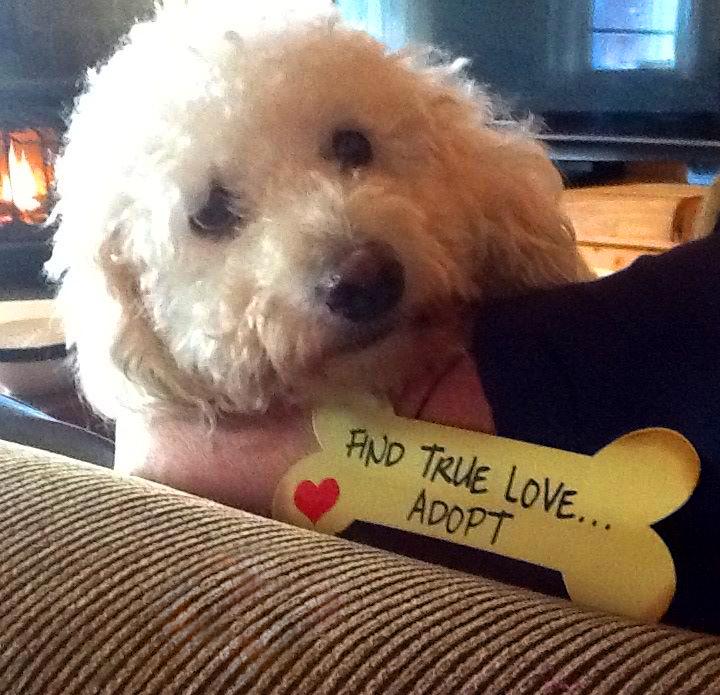 Find true love, adopt.jpg