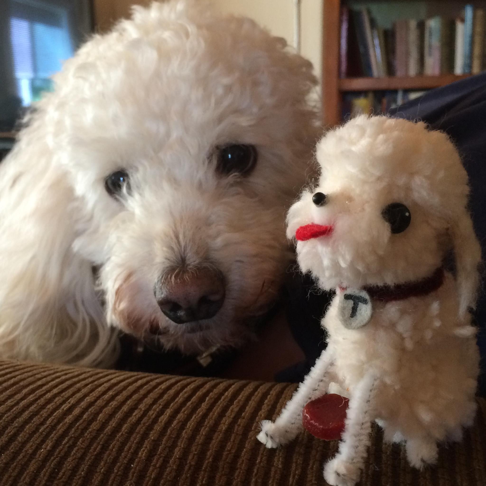 Toby and mini poodle.jpg