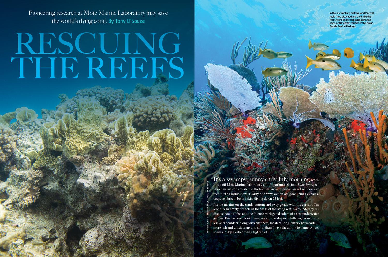 SARA_Reefs.jpg
