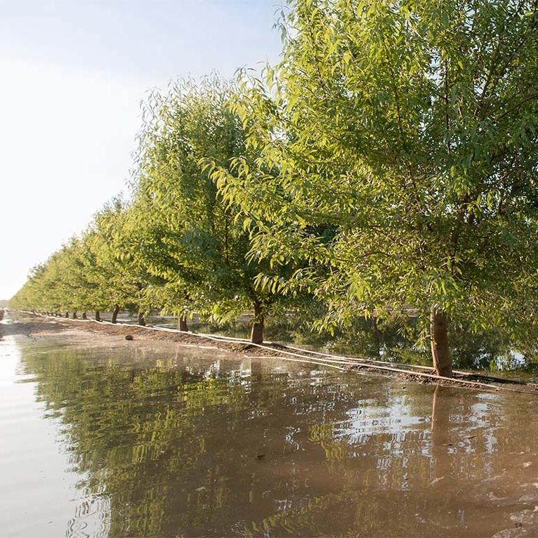 orchard-flood-sq.jpg