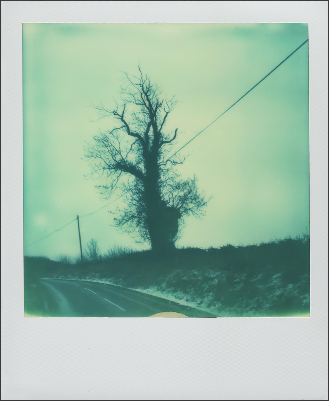 Polaroid 3.jpg