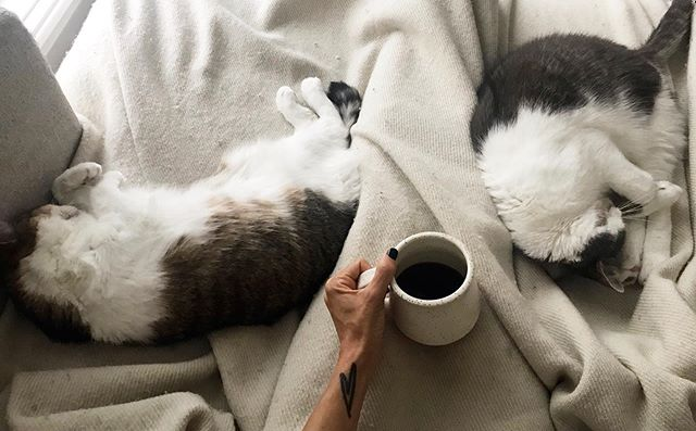 . MORNING GOOD These are just a few of my favourite things. . . . #morninggood #sacredpause #coffee #nourish #cuddle #meditate #makegreat #lovethesefuzzies #sacredpaws #soakinthemoments #lifetreasure