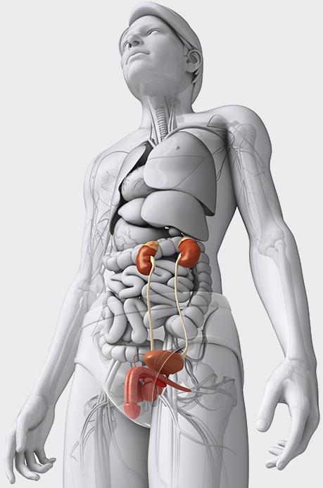 anatomia1.jpg