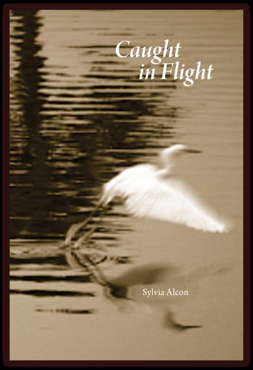 Sylvia+Alcon,+Caught+In+Flight.png