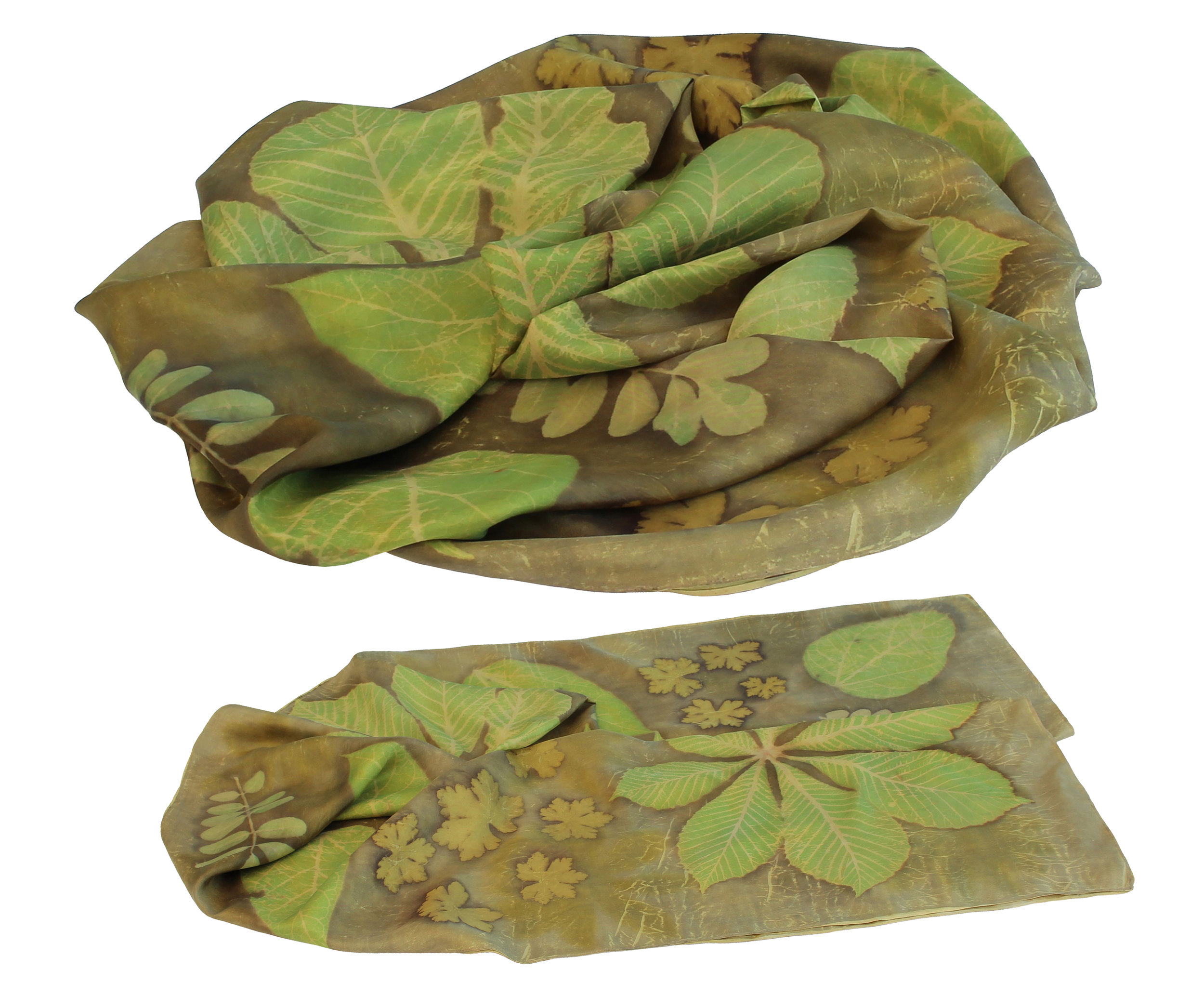 Acacia, Chestnut, Locust and Catalpa