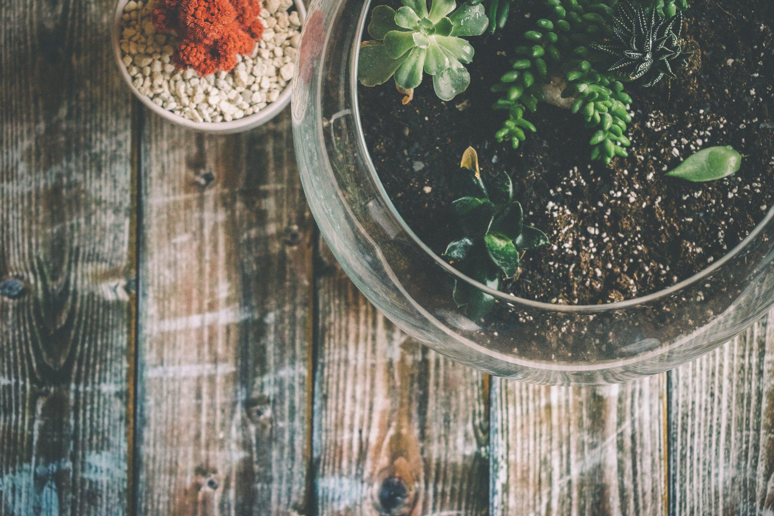 cactus-glass-leaves-185495.jpg