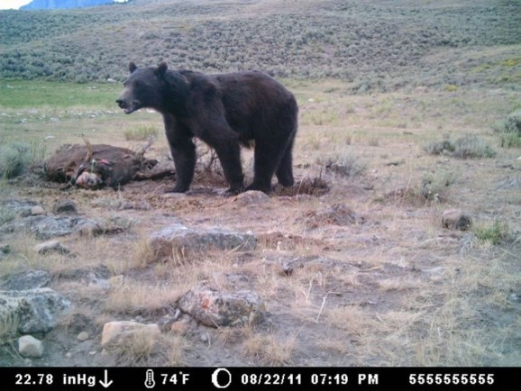 Photo Credit: Wyoming Game & Fish