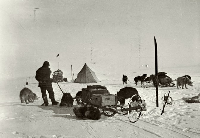 Dogs, which Amundsen brought, could at worst case eat each other - and Amundsen actually planned with this as a food supply for them! And - he brought skis and lots of room for error with   huge   amounts of food-supply.   He had specifically trained with the best survivors in this climate - the   Intuits   - and learned to master the dog-sledge handling.
