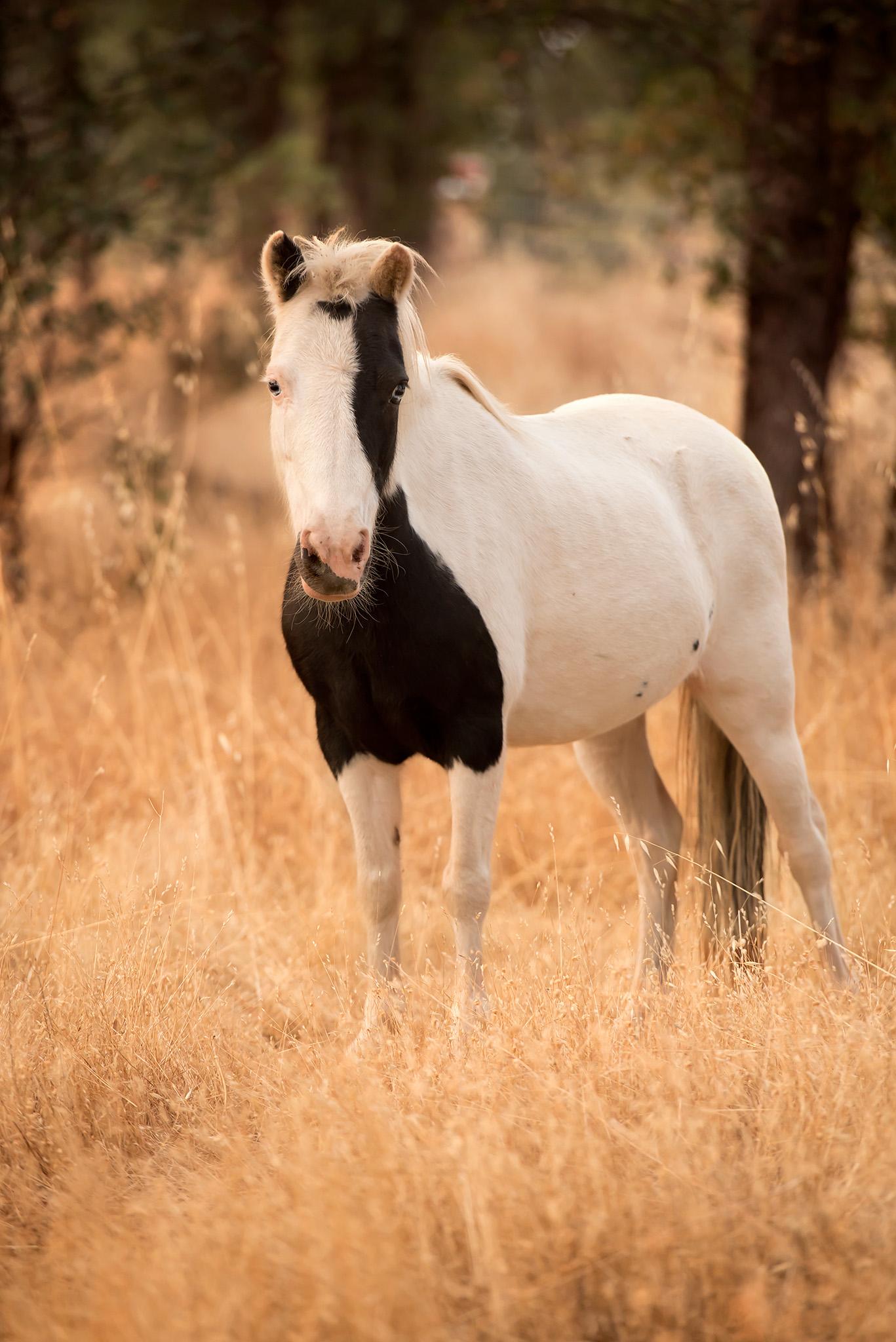 Shasta County Photographer