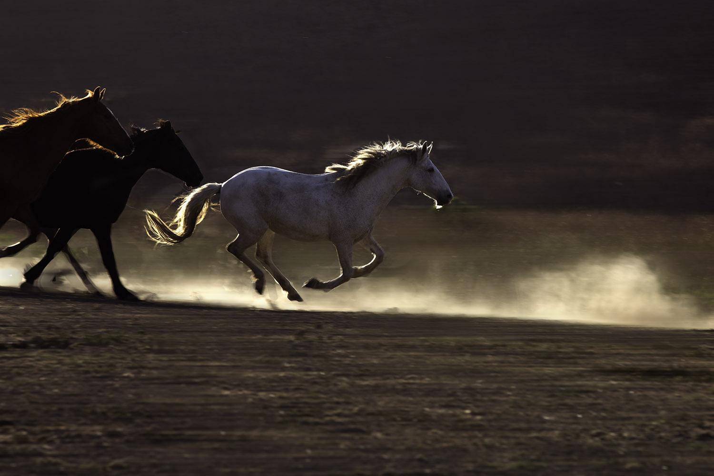 White Mare Running_Blog Size-7381.jpg