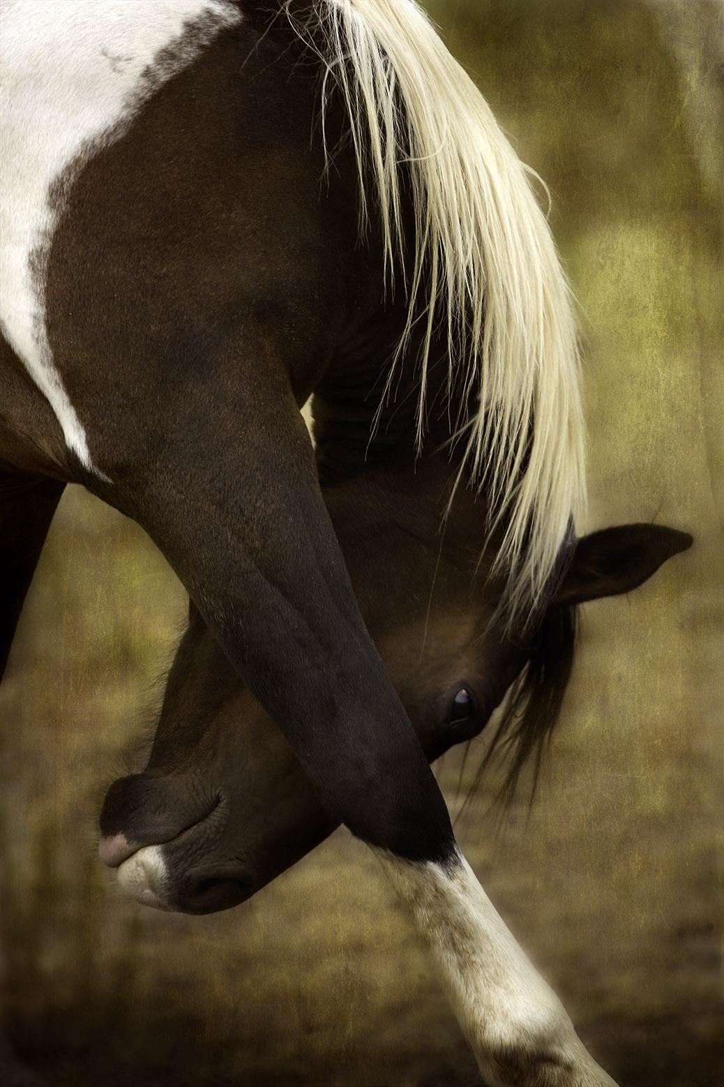 Bowing_Horse_ Blog _ Size_9704 copy copy.jpg