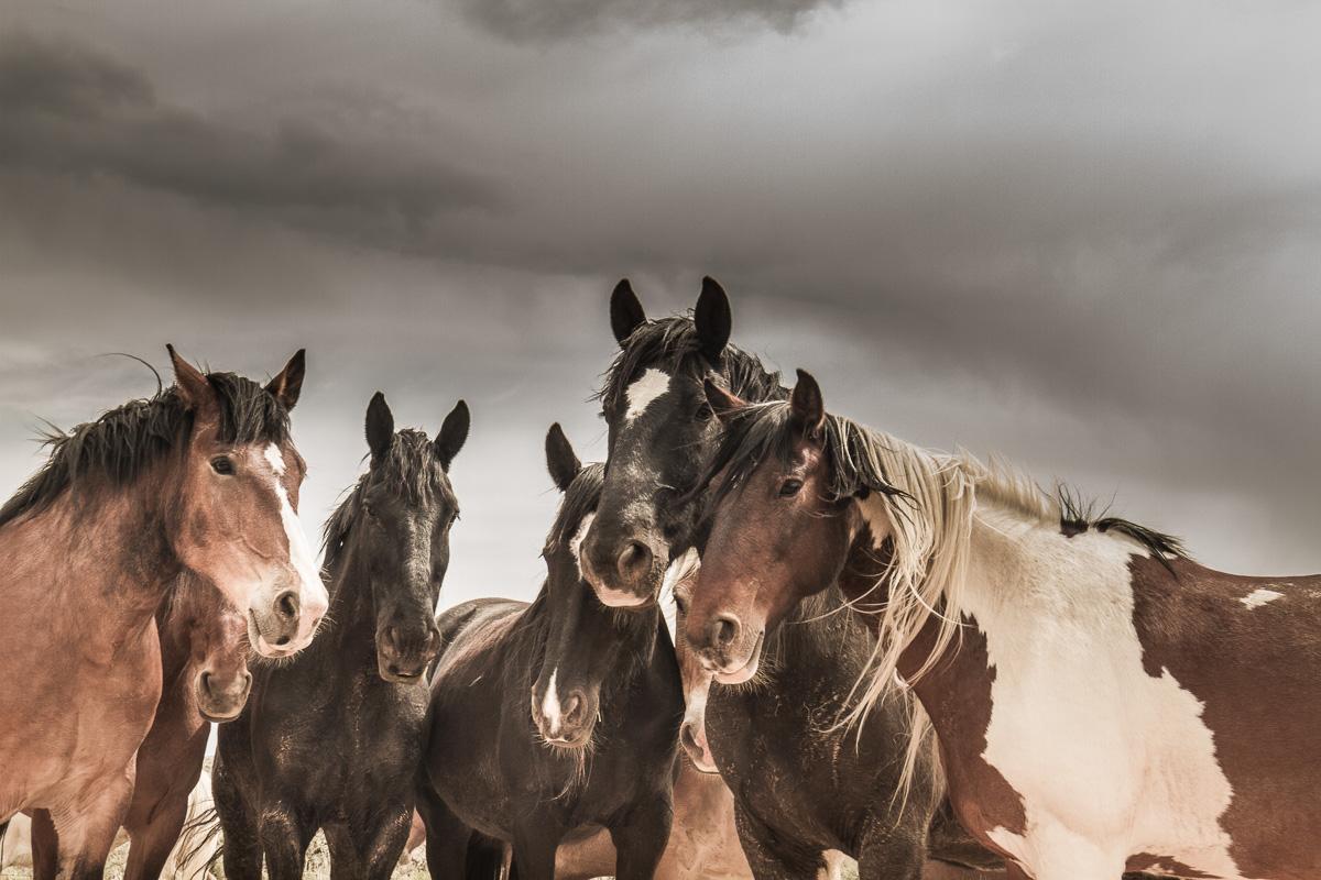 Horse Drive_9679_-.jpg